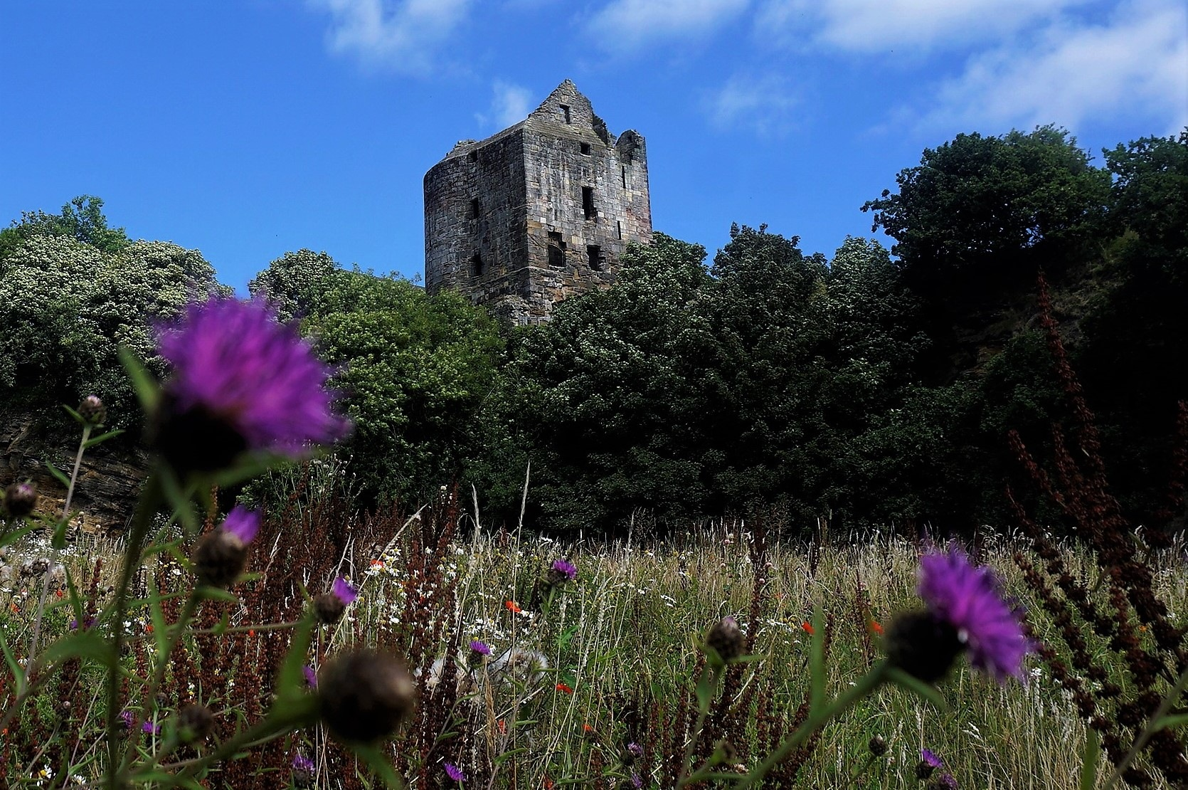 """""""Thistle and Castle"""" by Thania Wehmeyer"""