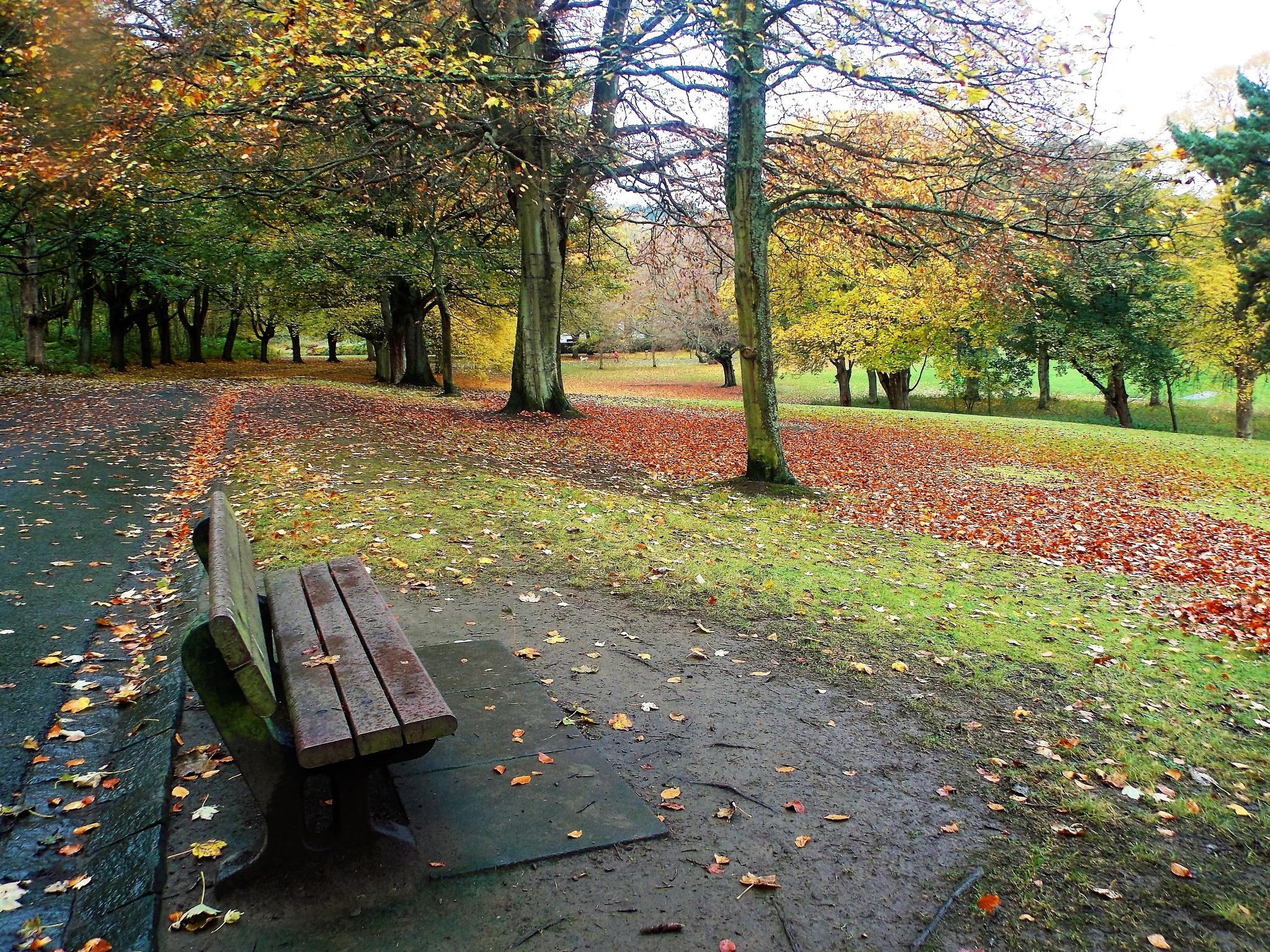"""Amazing Autumn"" by Thania Wehmeyer"
