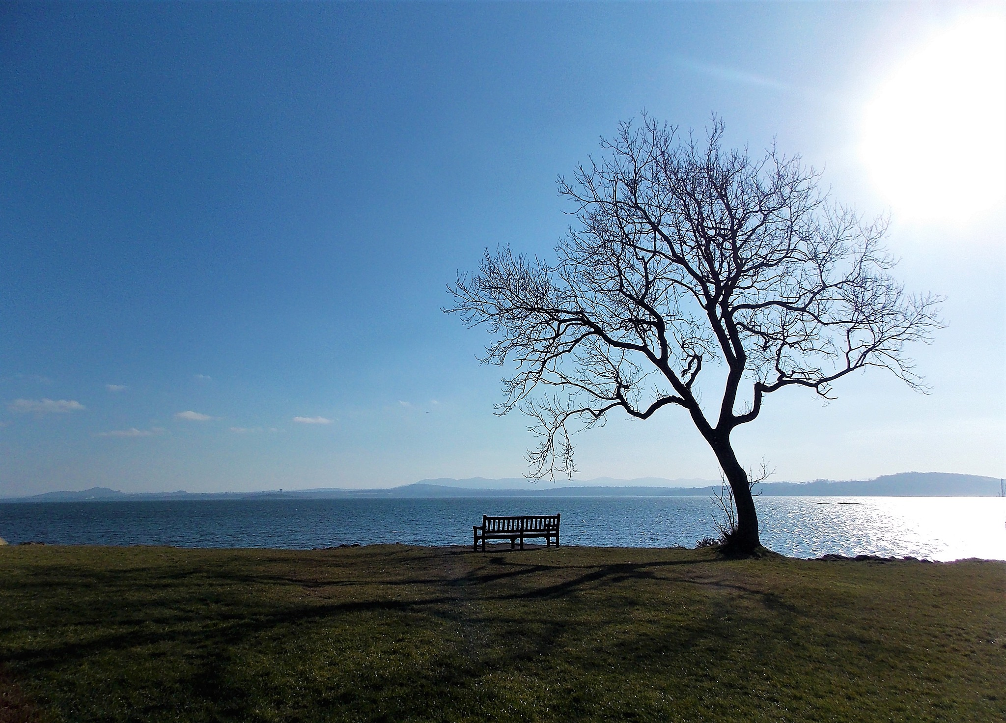 """""""Tree and Bench"""" by Thania Wehmeyer"""