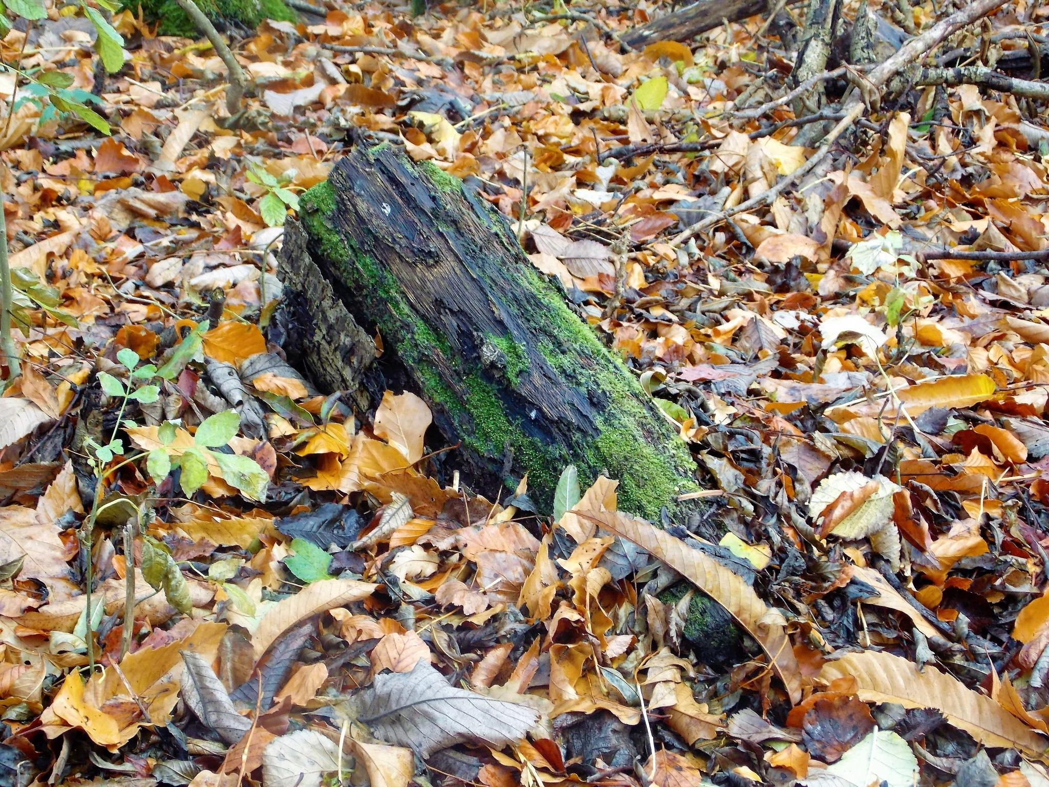 "Hidden Tree Trunk"" by Thania Wehmeyer"