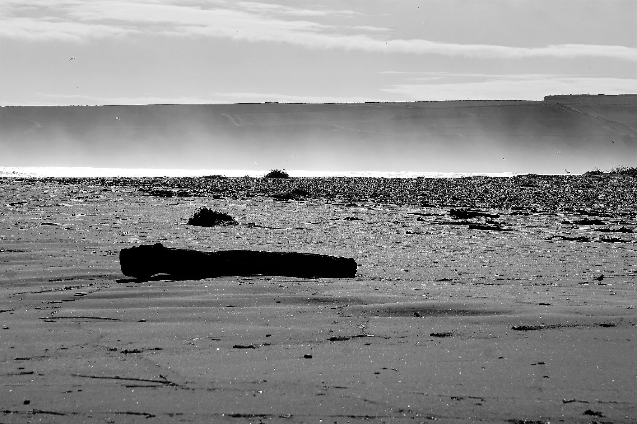 """""""Driftwood"""" by Thania Wehmeyer"""