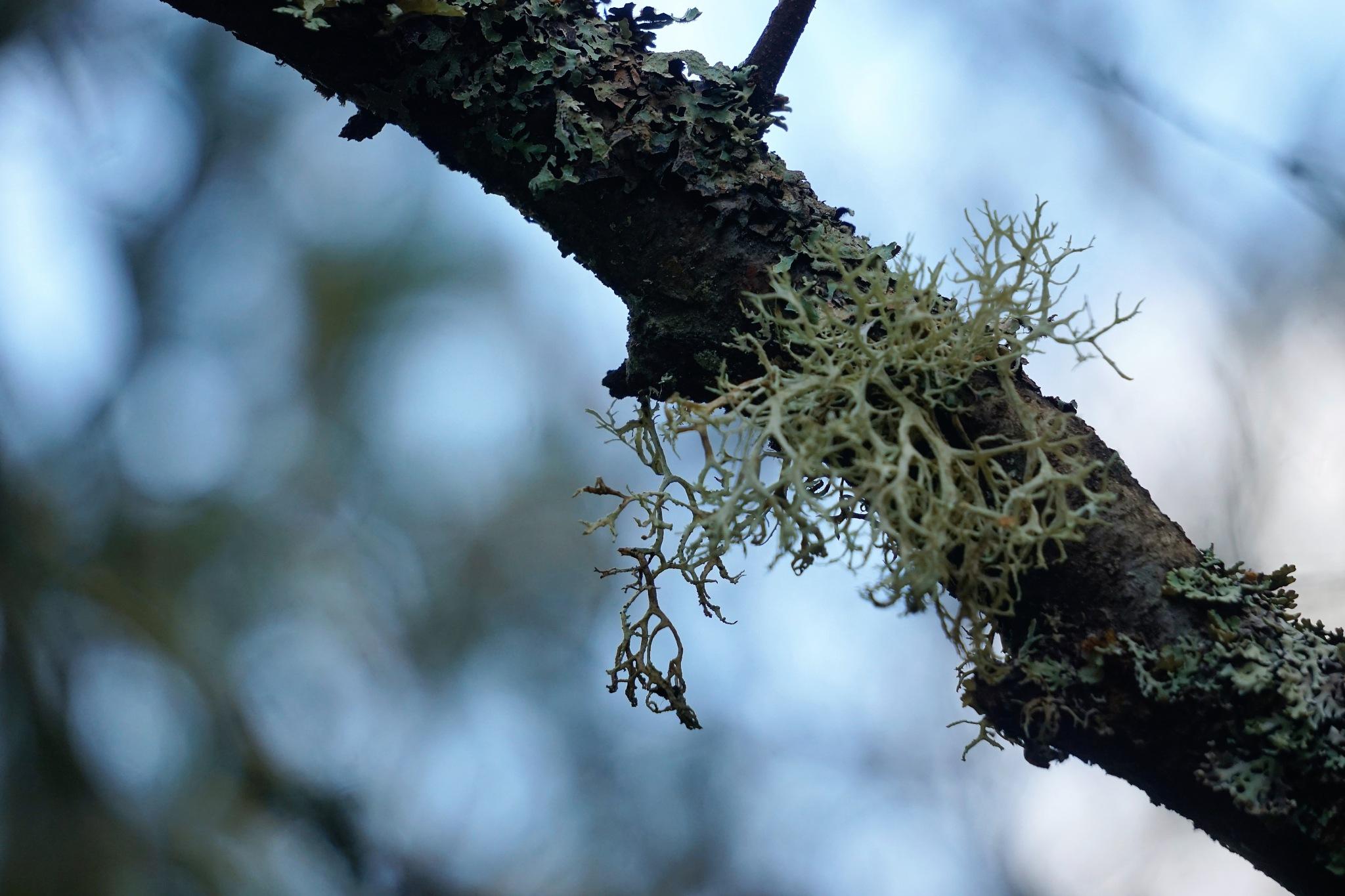"""""""Lichen"""" by Thania Wehmeyer"""