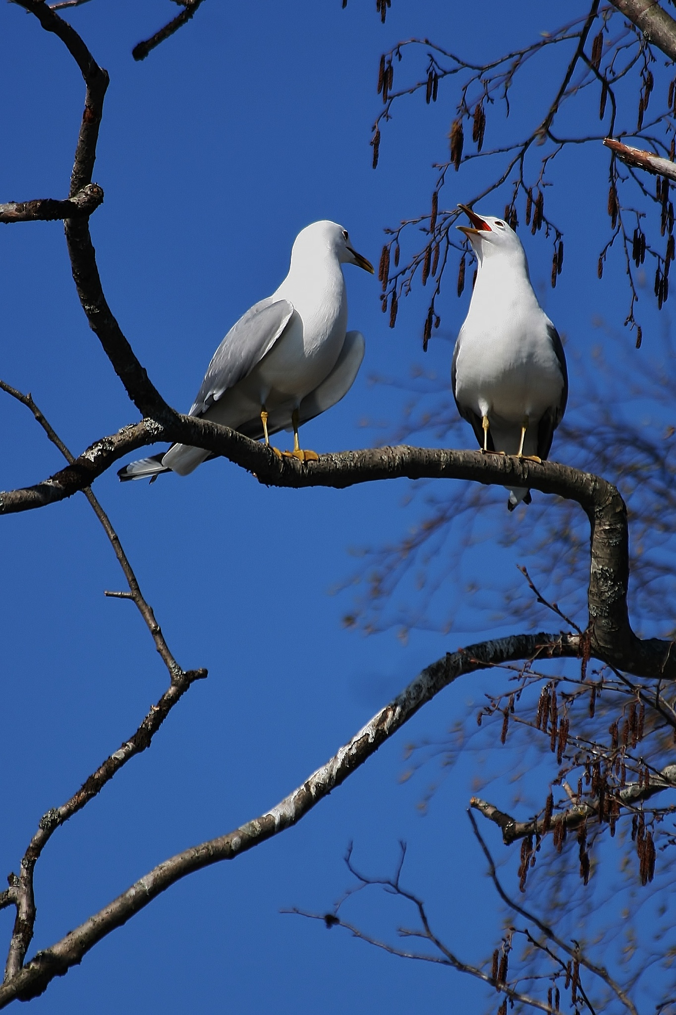 lovebirds by antsatykkylainen