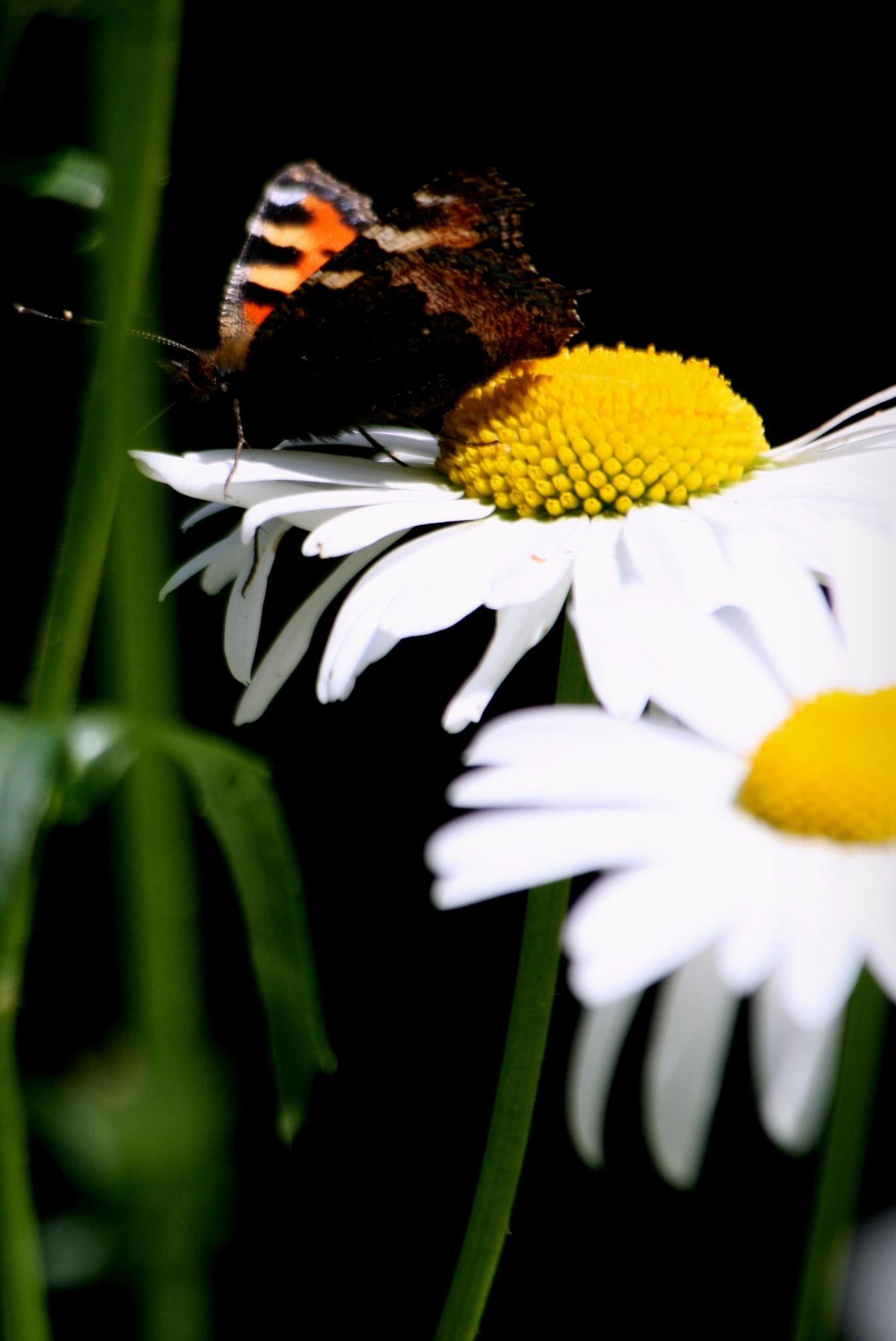 momentum in flower by antsatykkylainen