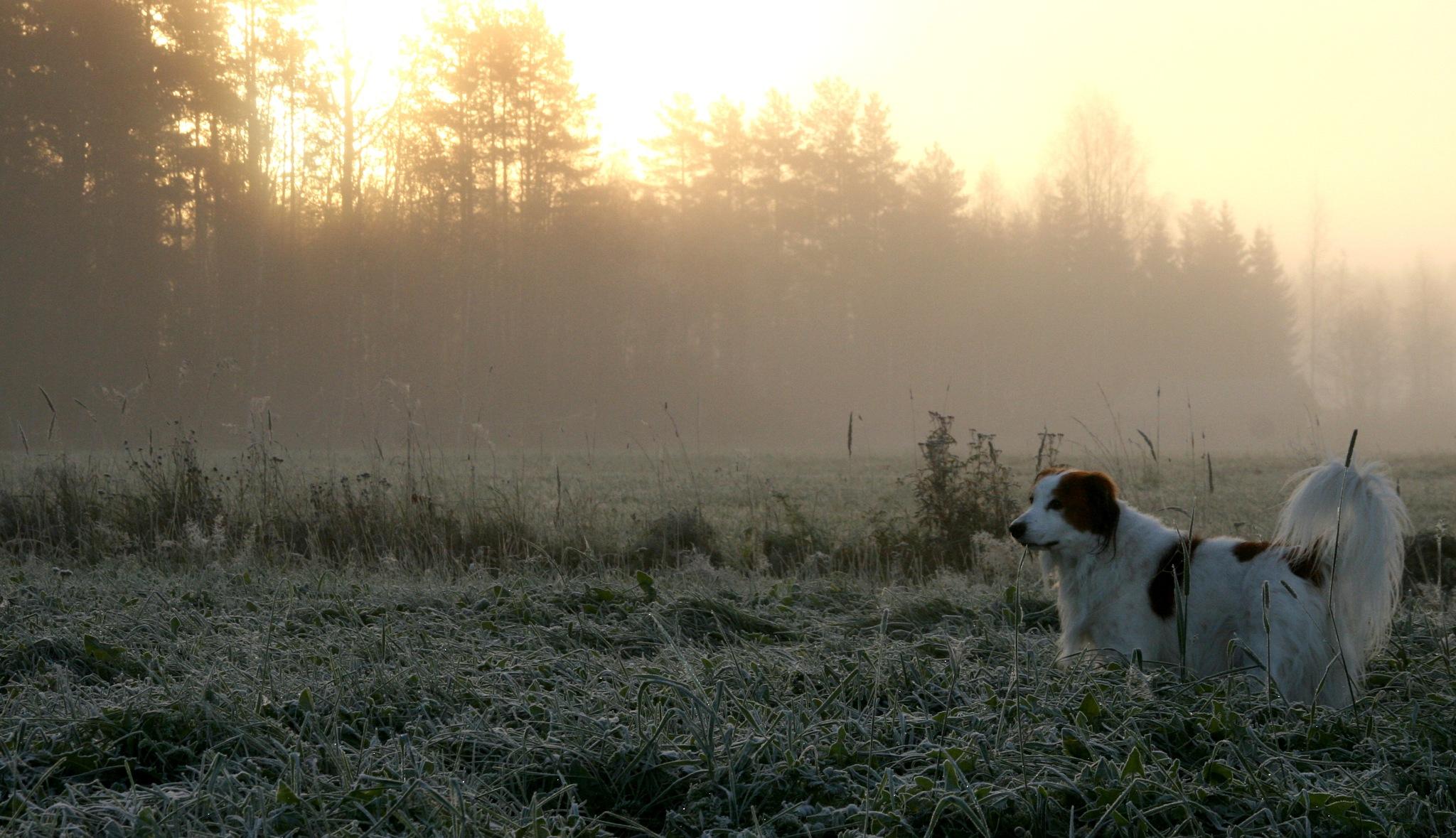 first frosty morning by antsatykkylainen