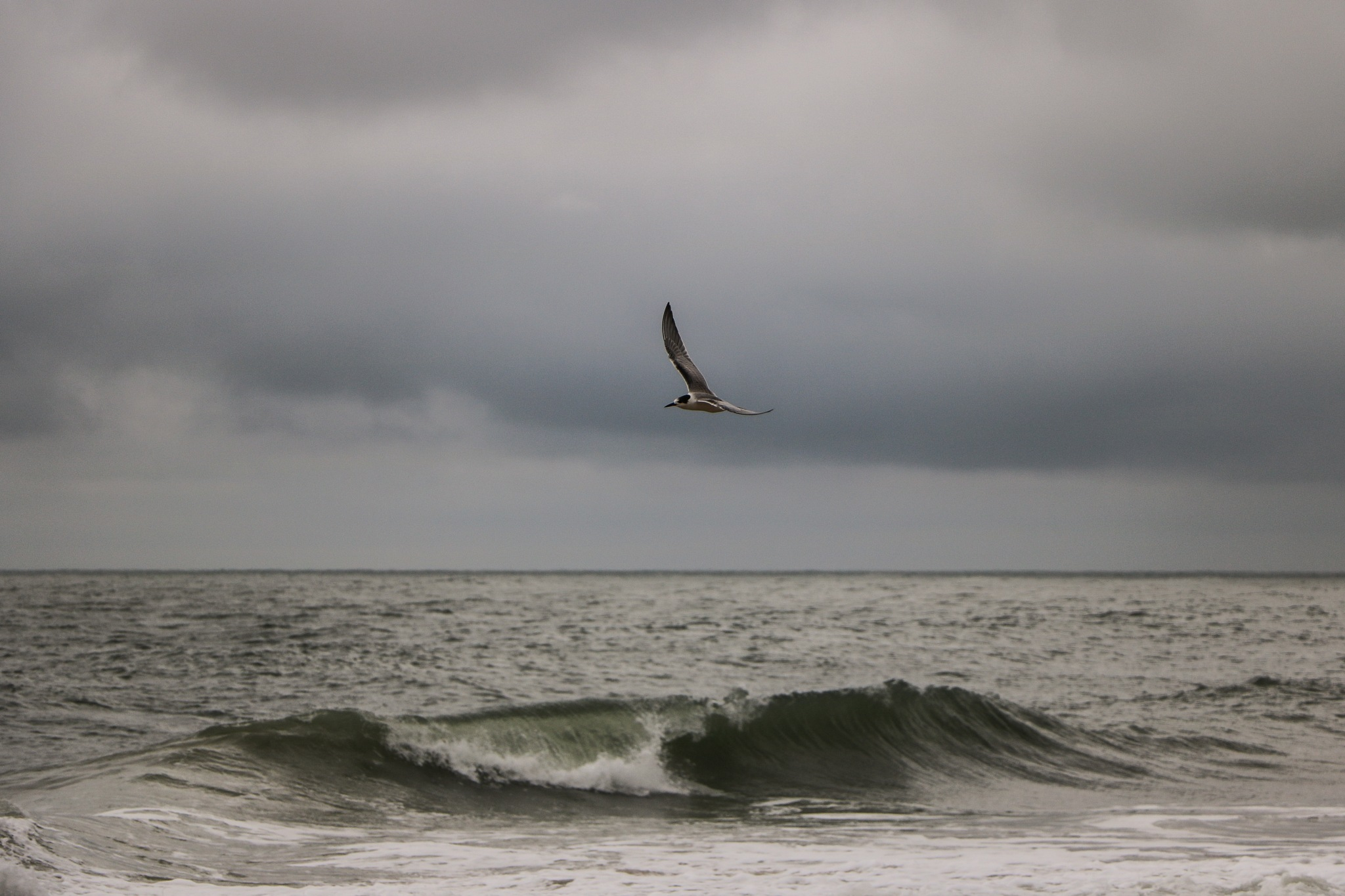 Tern and Wave by Gail Hunn