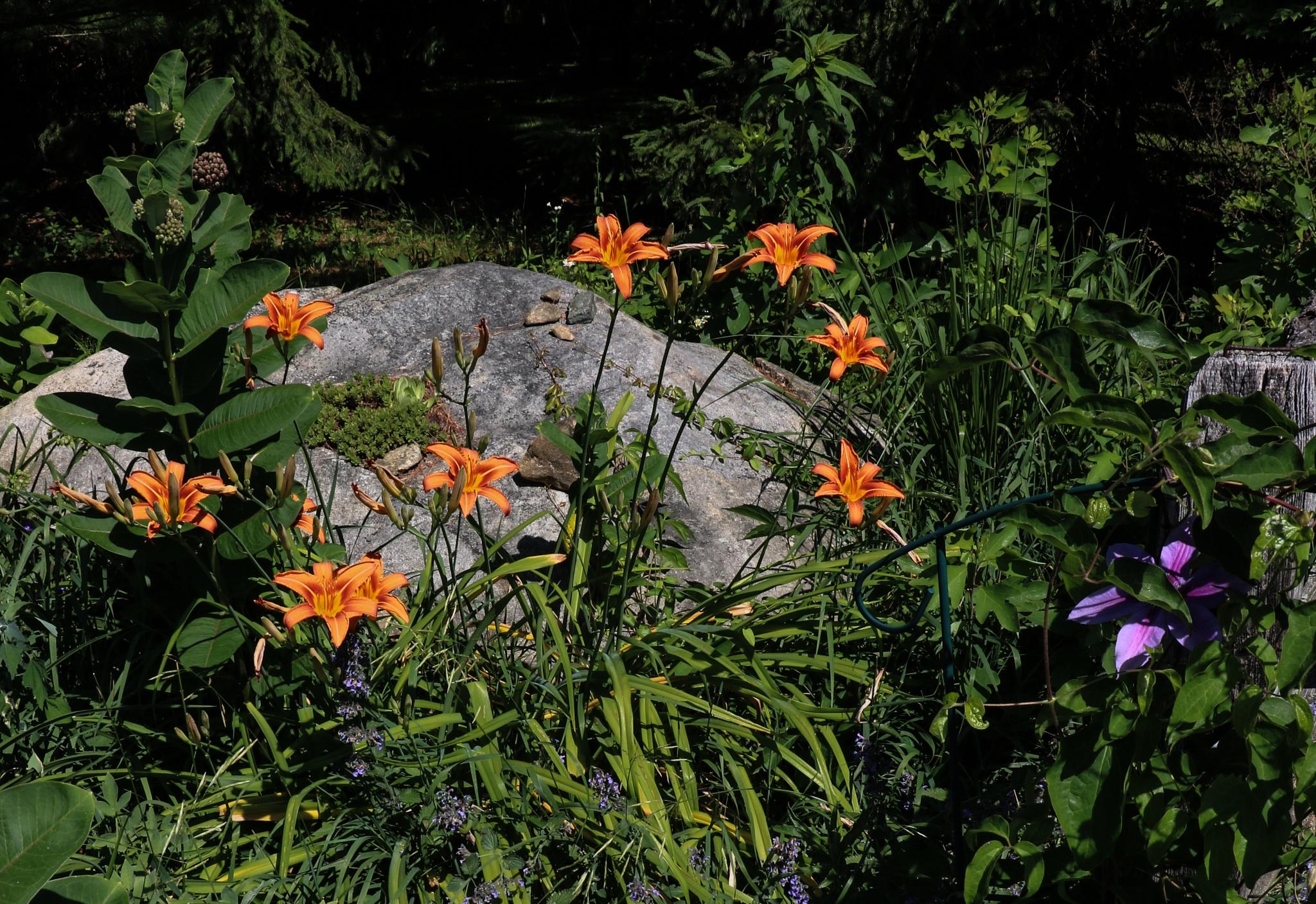 Big Rock (and some lilies) by Gail Hunn