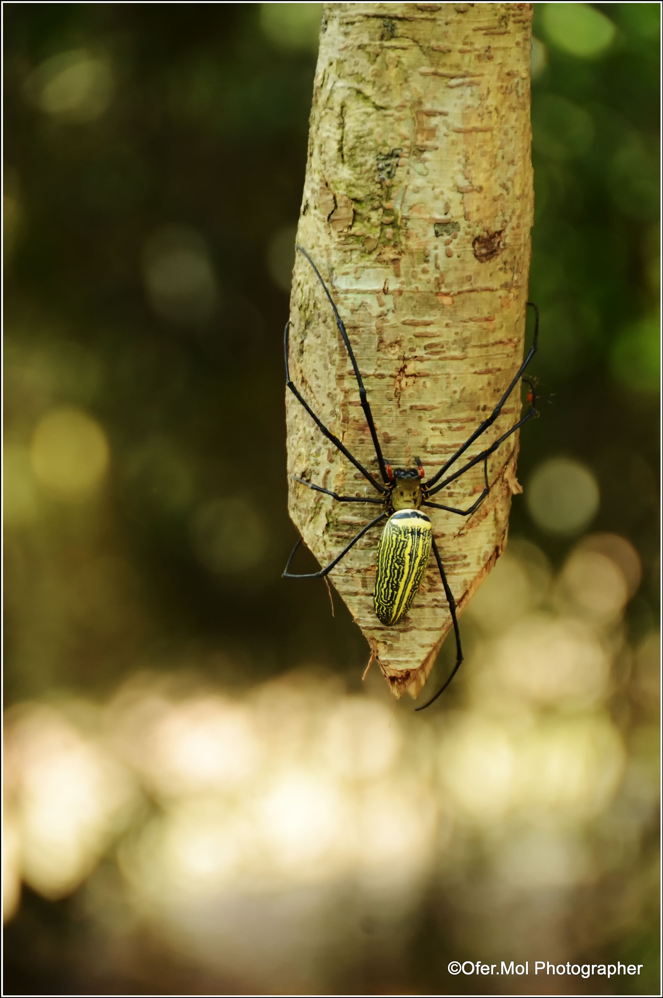spider - cambodia by ofermolPhotographer