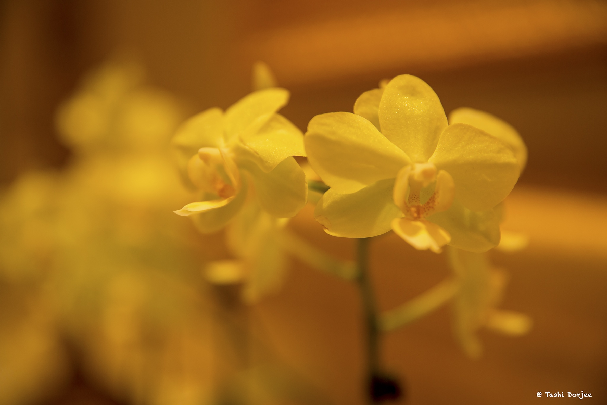 花 by Tibetravel Photography