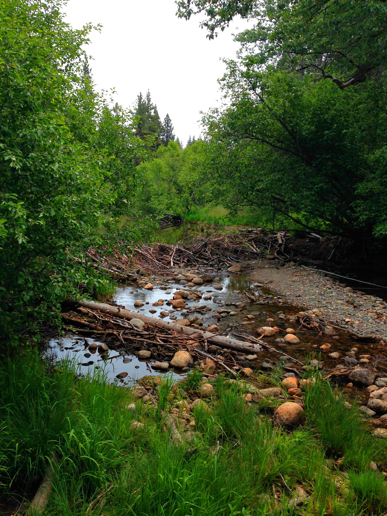 Beaver Dam by rayboudewyn