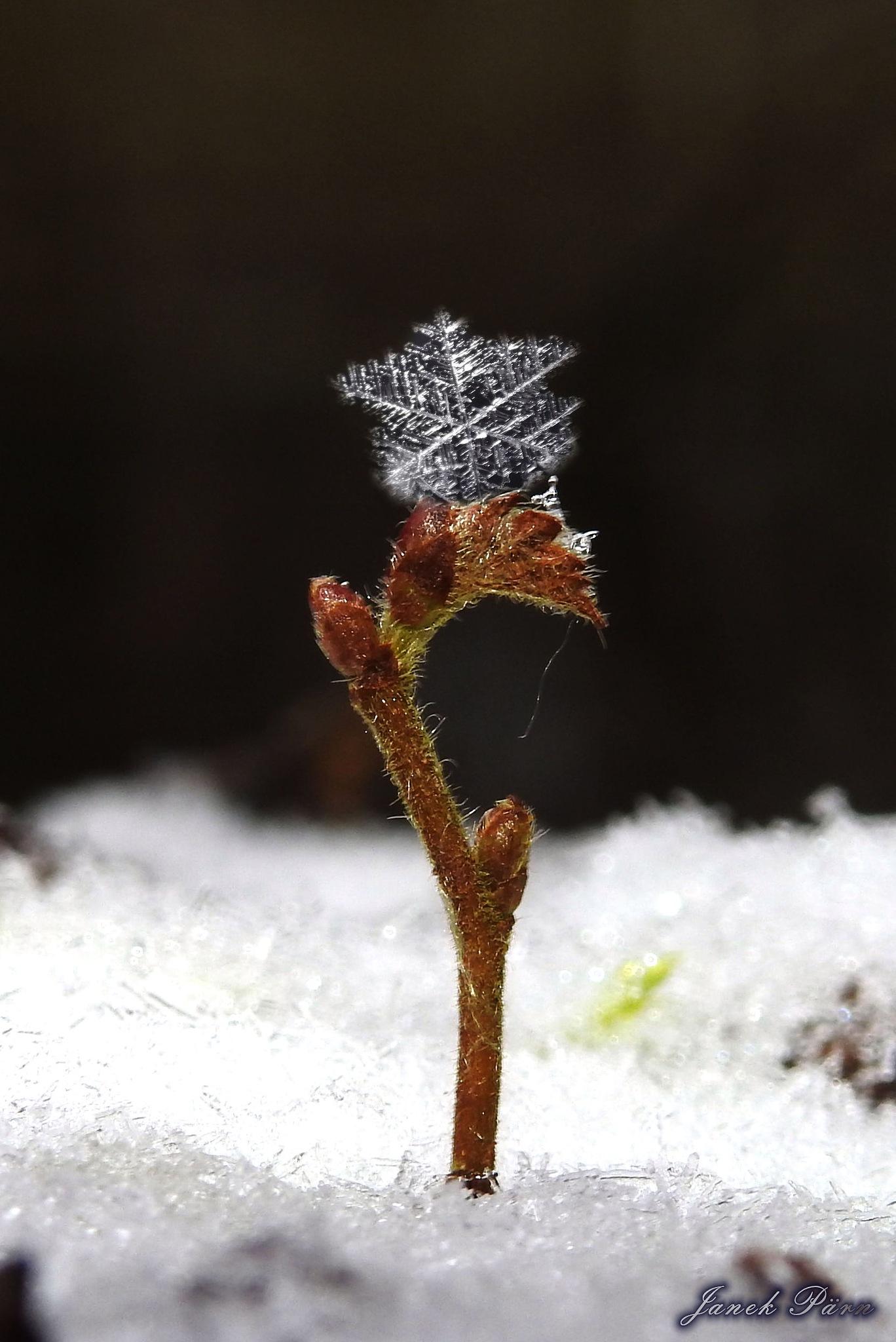 Snowflake in good hands by pildistaja1