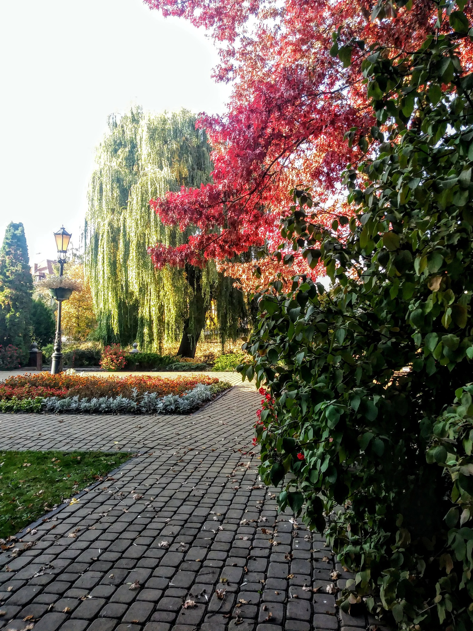 Ogród by jozgraf