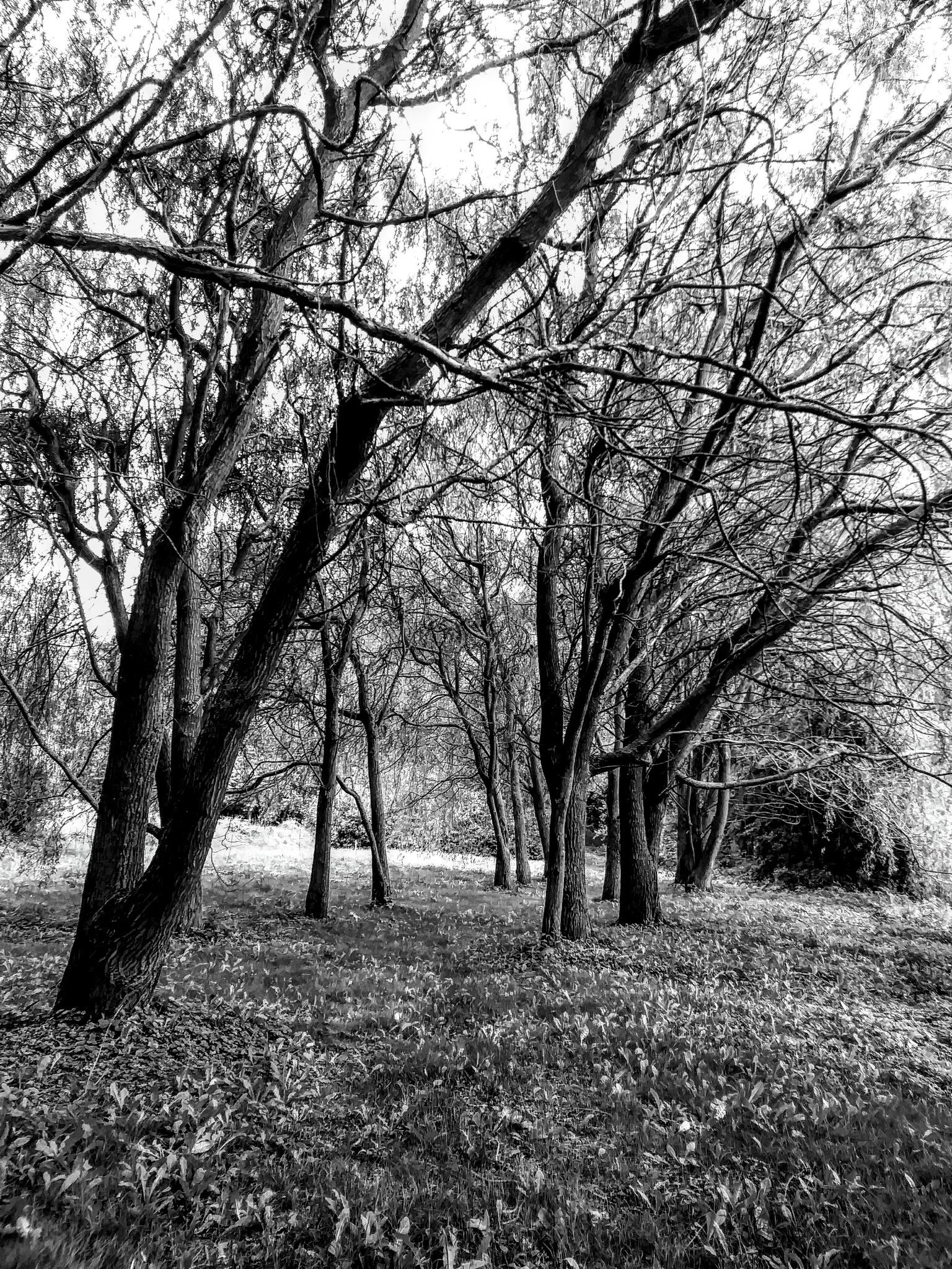 Widok w parku by jozgraf