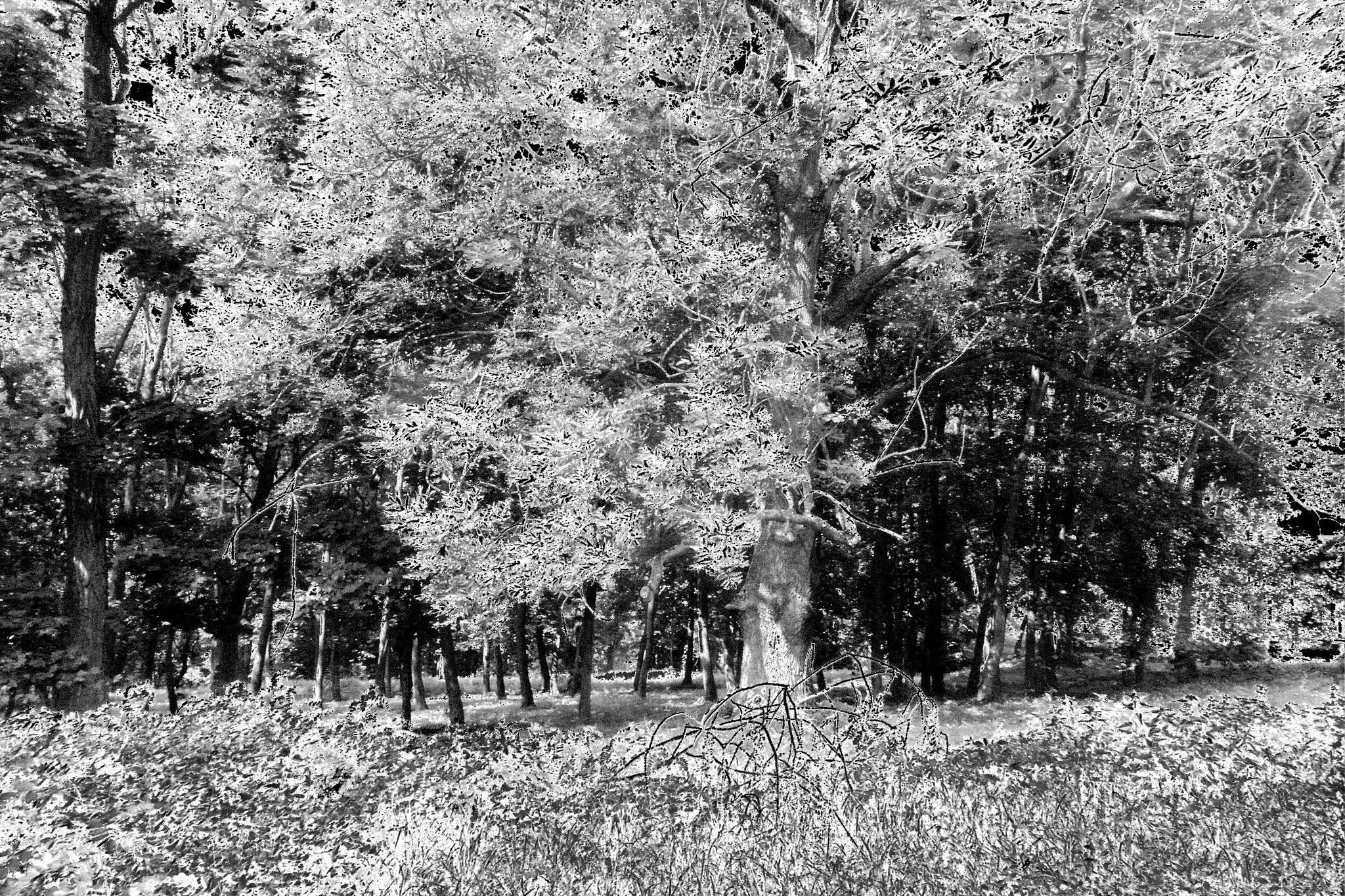 Park przy Pałacu w Skłudzewie by jozgraf