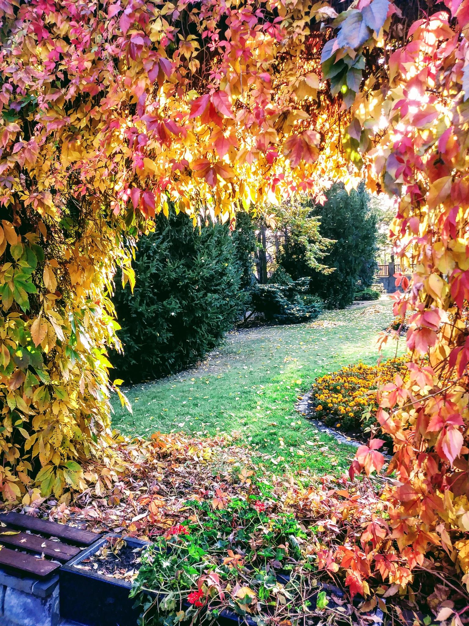 Barwy jesieni by jozgraf