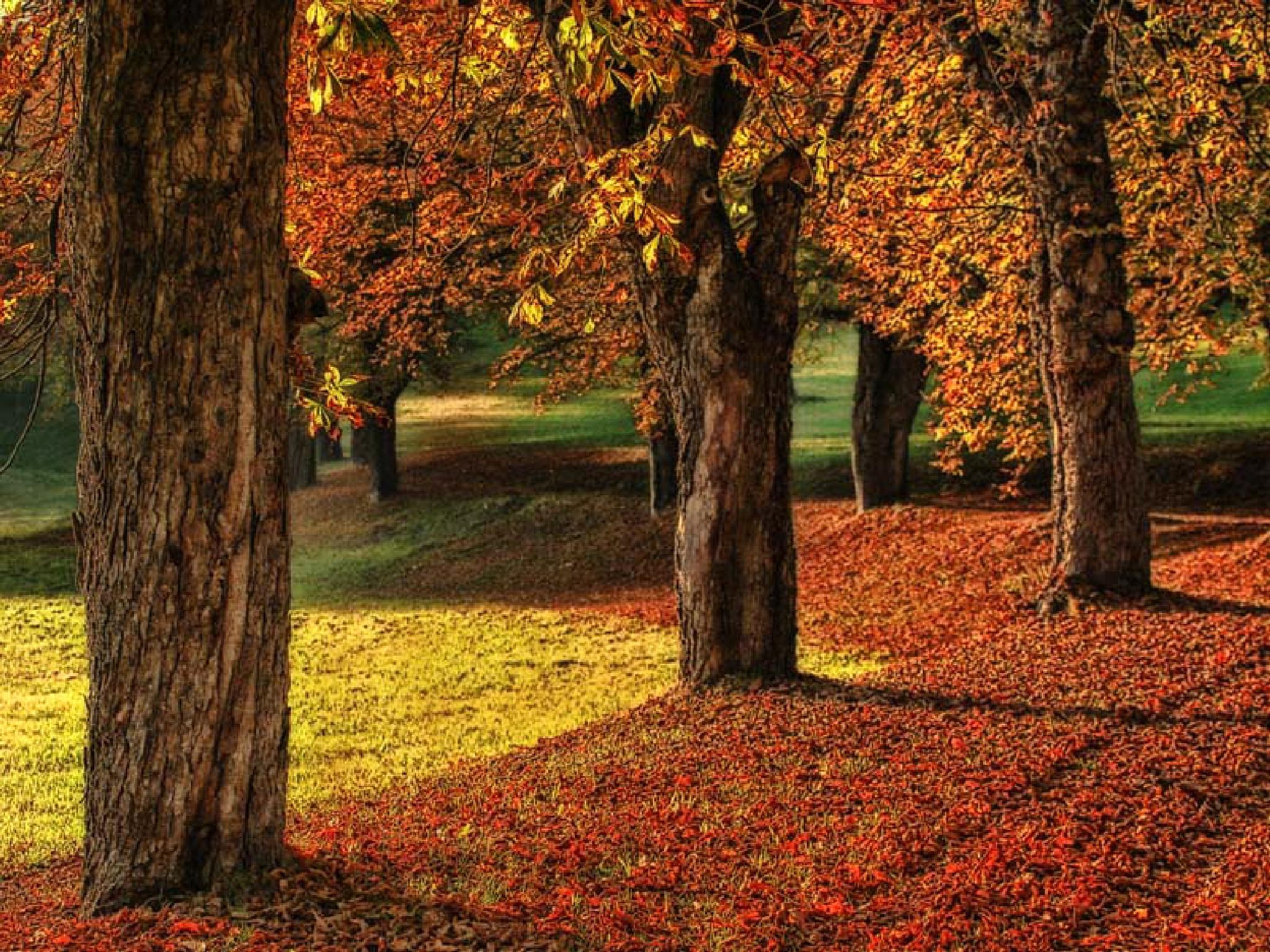 Autumn by regzech