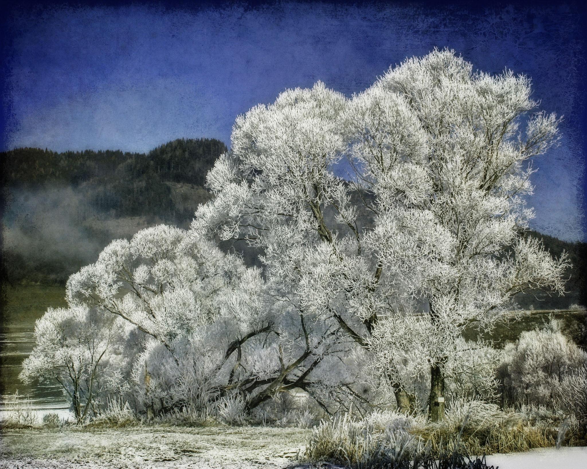 Frosty by regzech