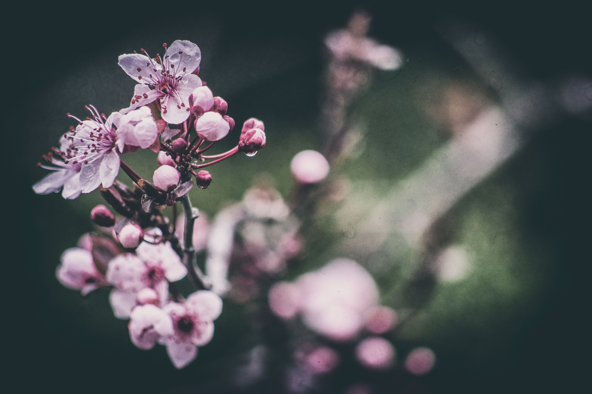 blossom 2 by Angelo Petrozza