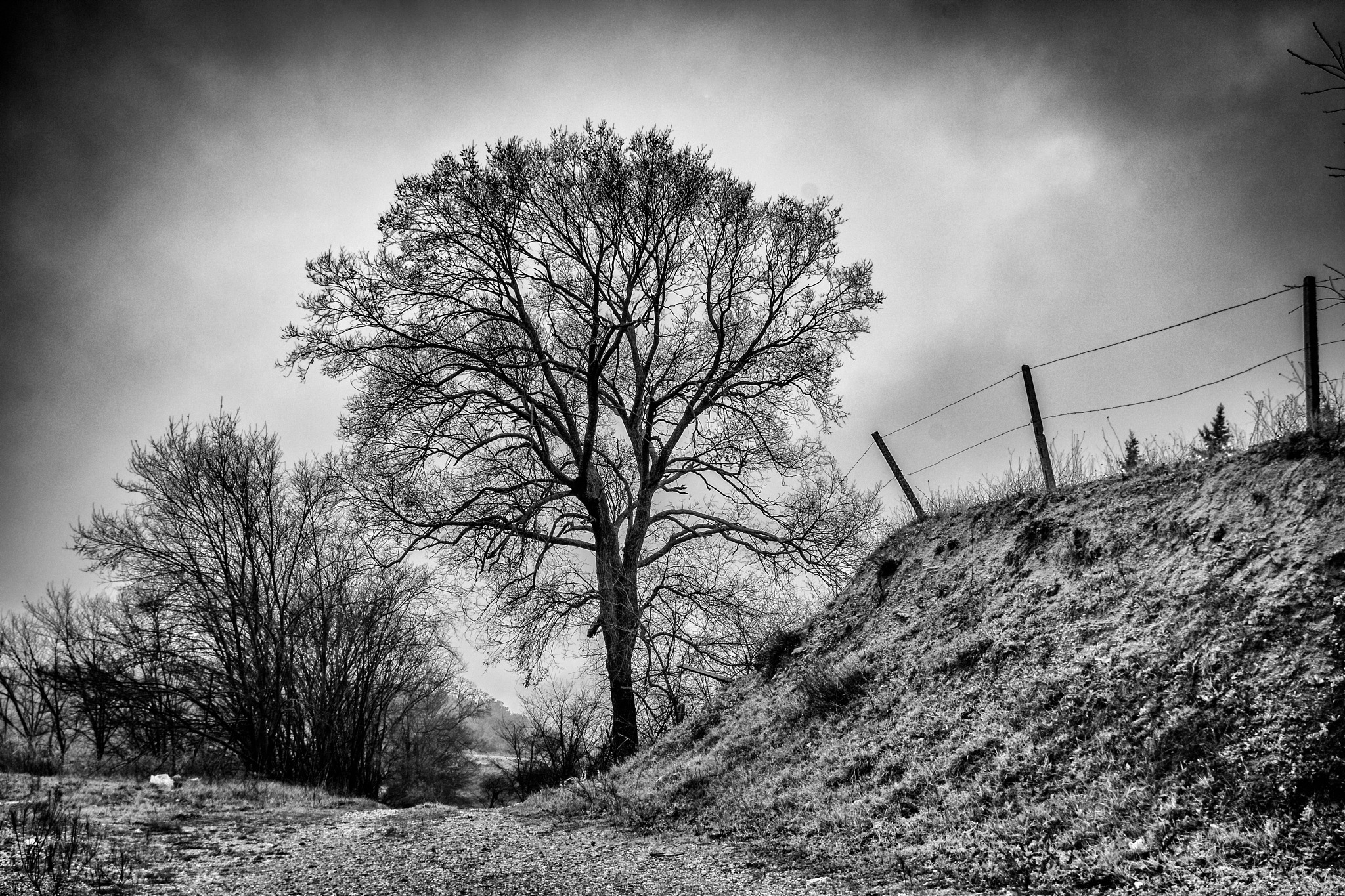 tree and fence by Angelo Petrozza