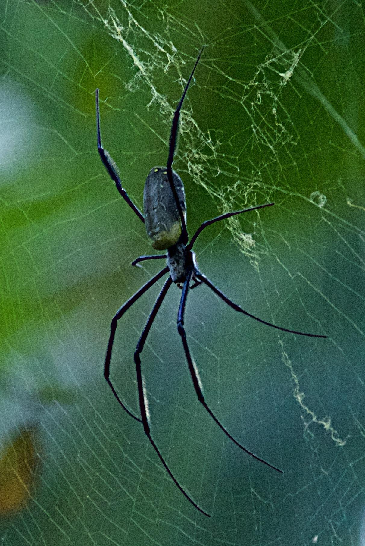 Orb Web Spider by sandybrady