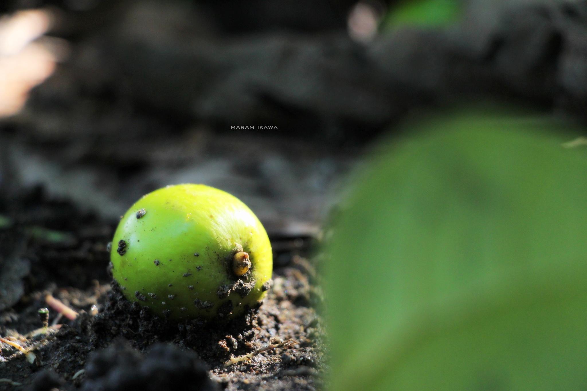 does not fall far from the tree by maram ikawa