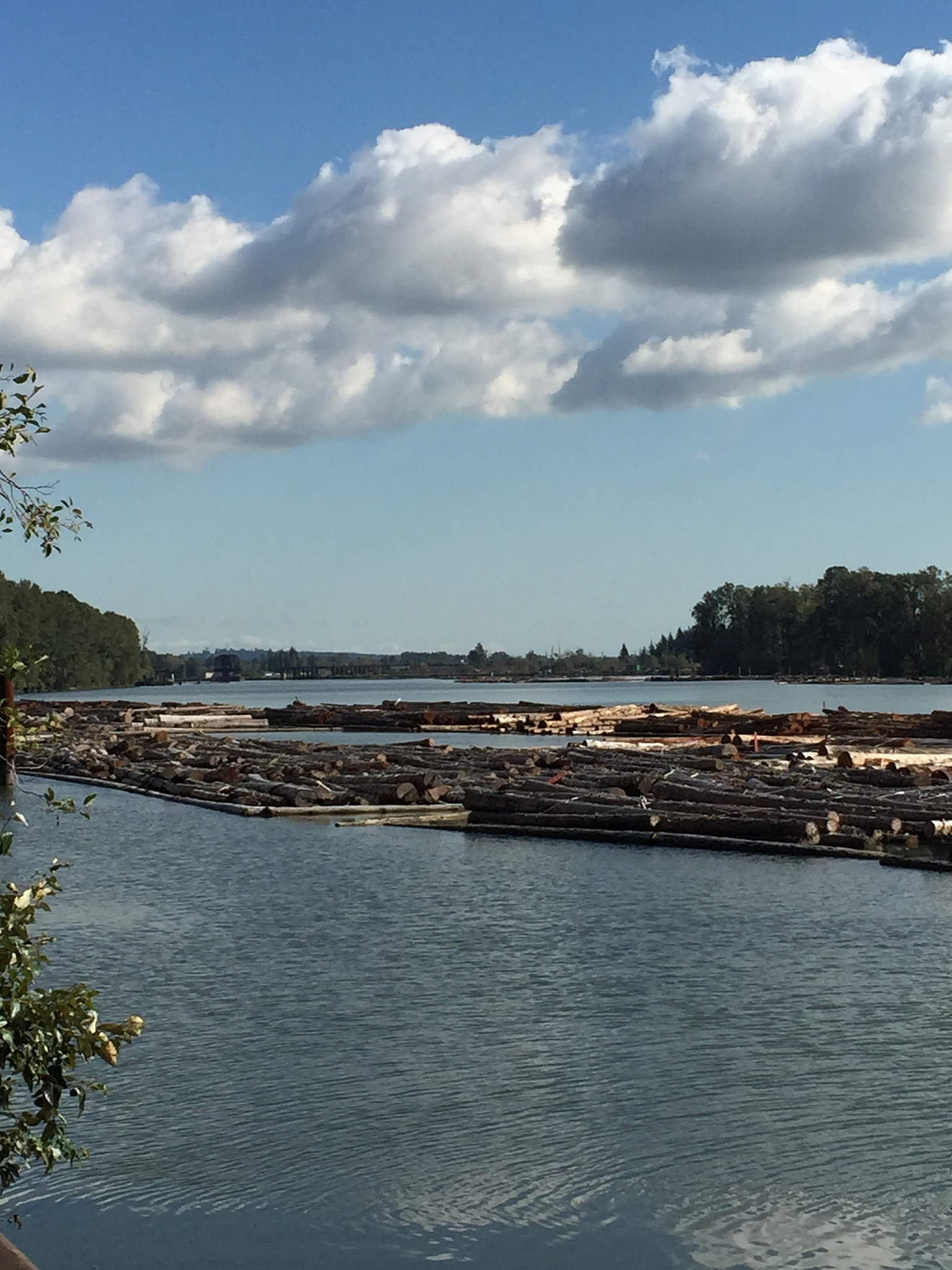 Fraser River logs by Peanut