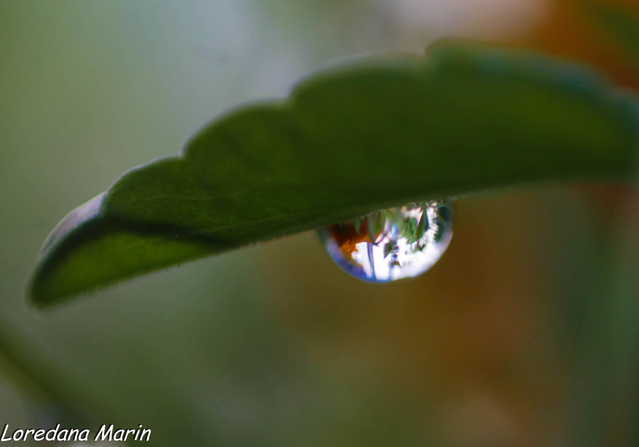 Photo in Nature #water #drop