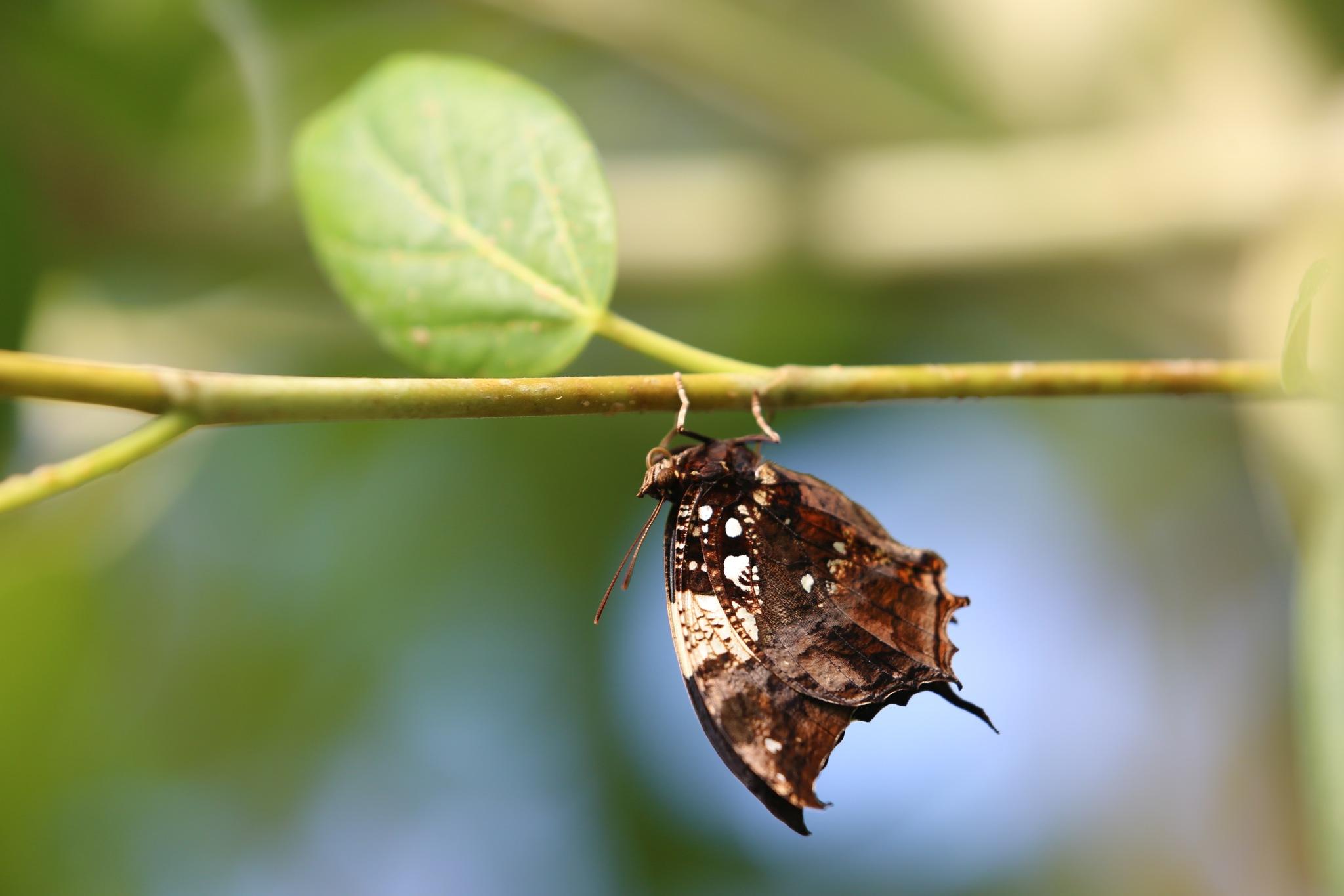 butterfly by Felix Jean Touboul