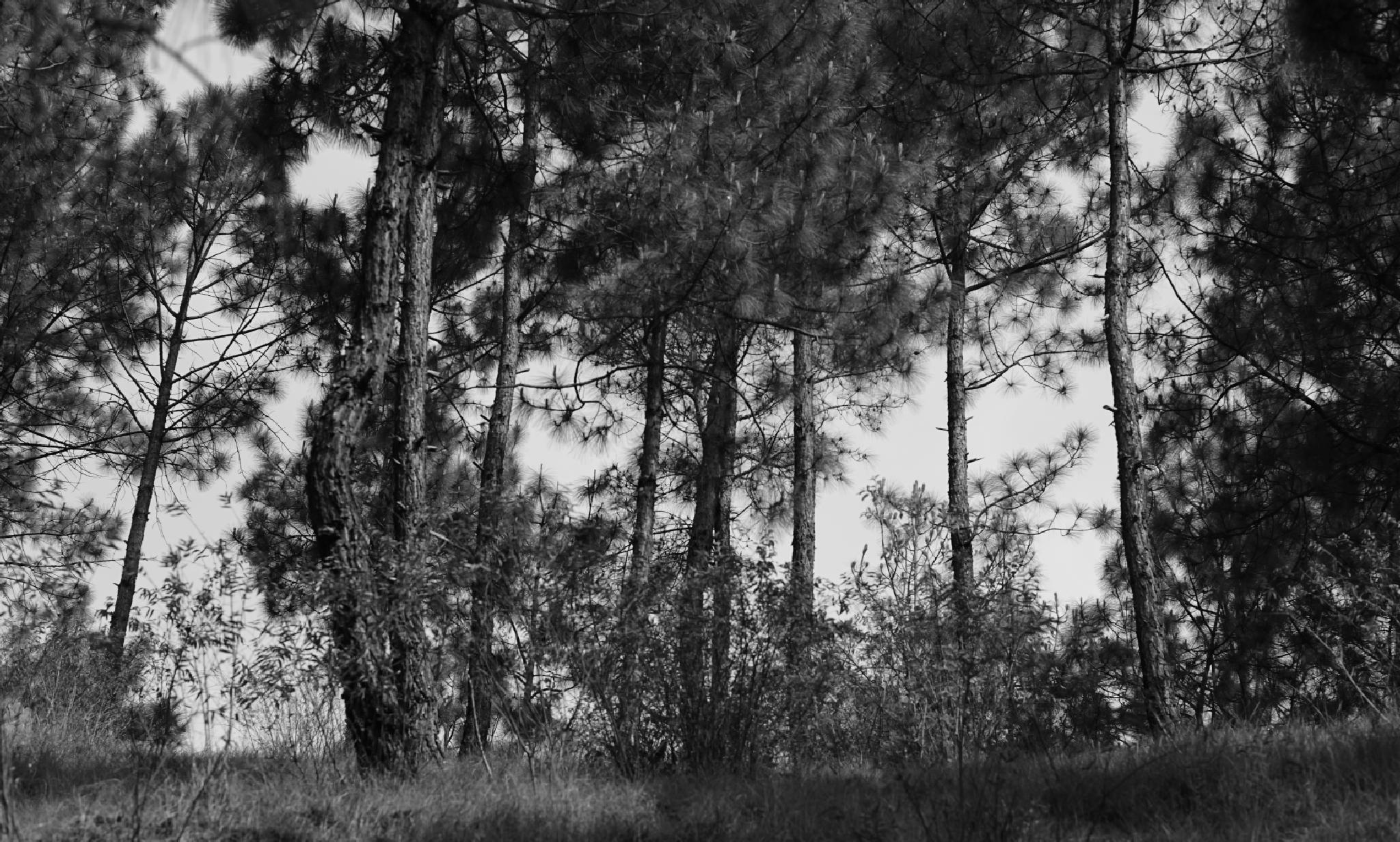Nature by inderjeet singh