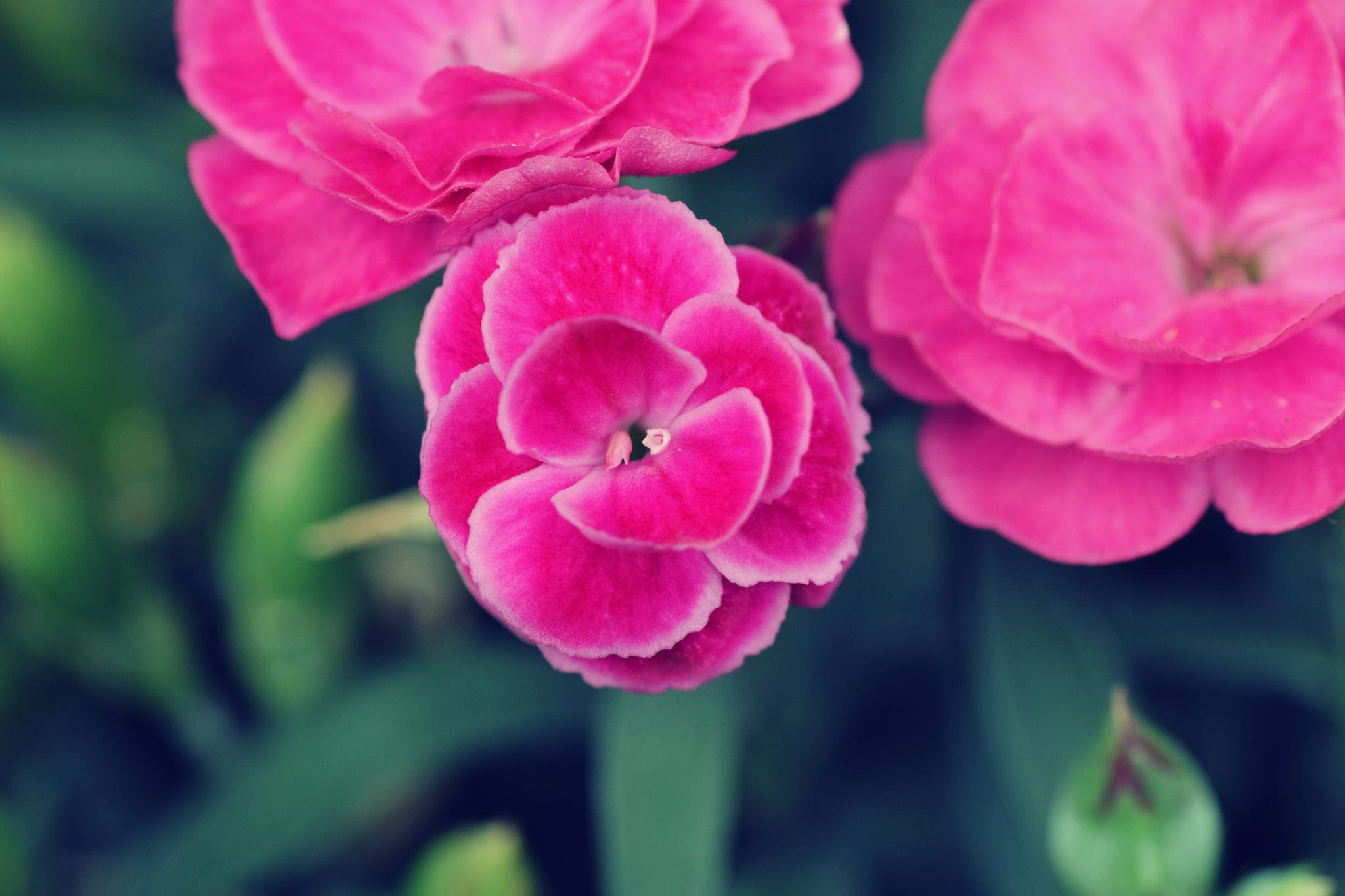Flower by Solaika