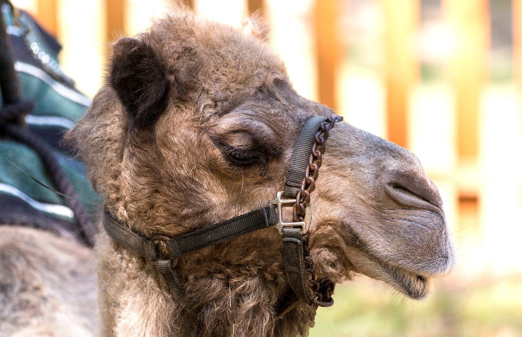 Photo in Random #geico #mike #camel #hump #hump day