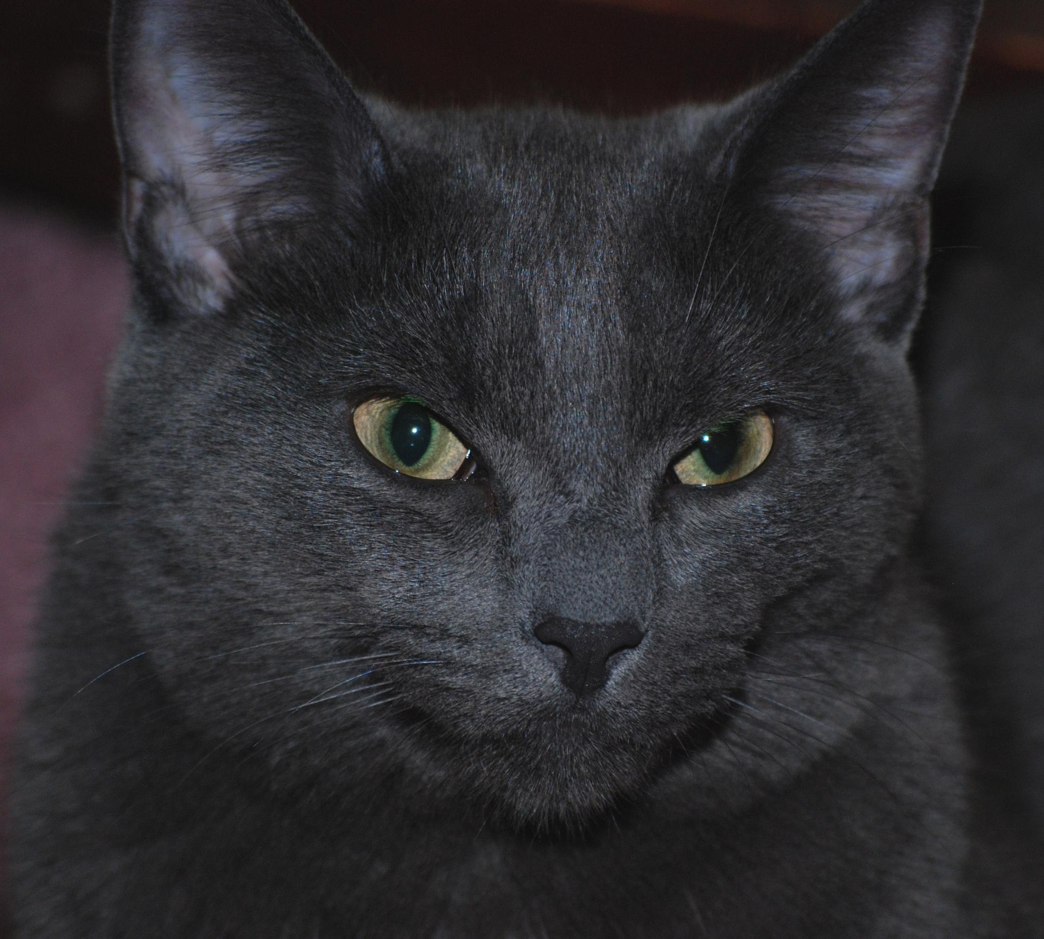 Cat by Doug Fosnight