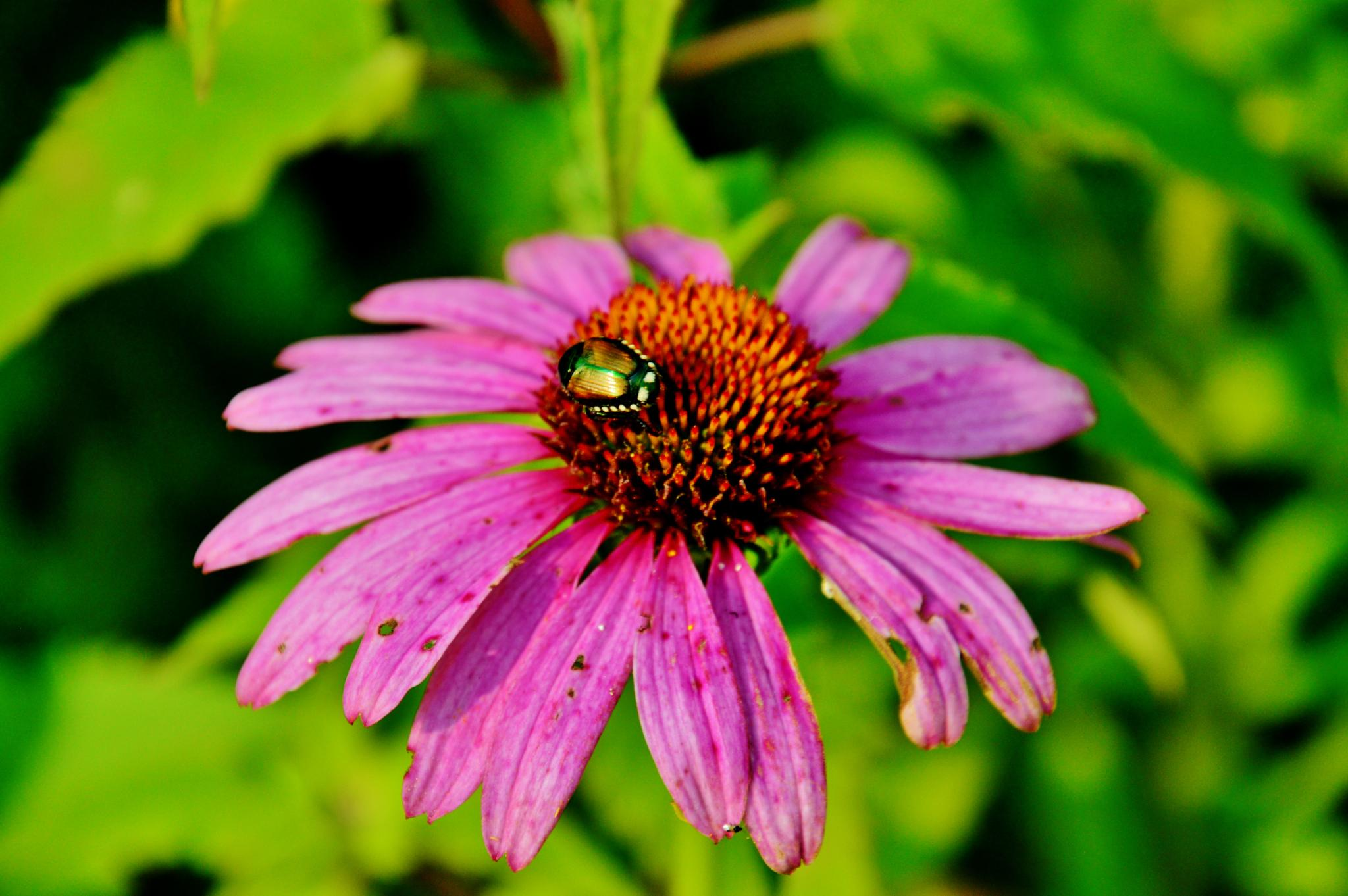 Bug on flower by Doug Fosnight