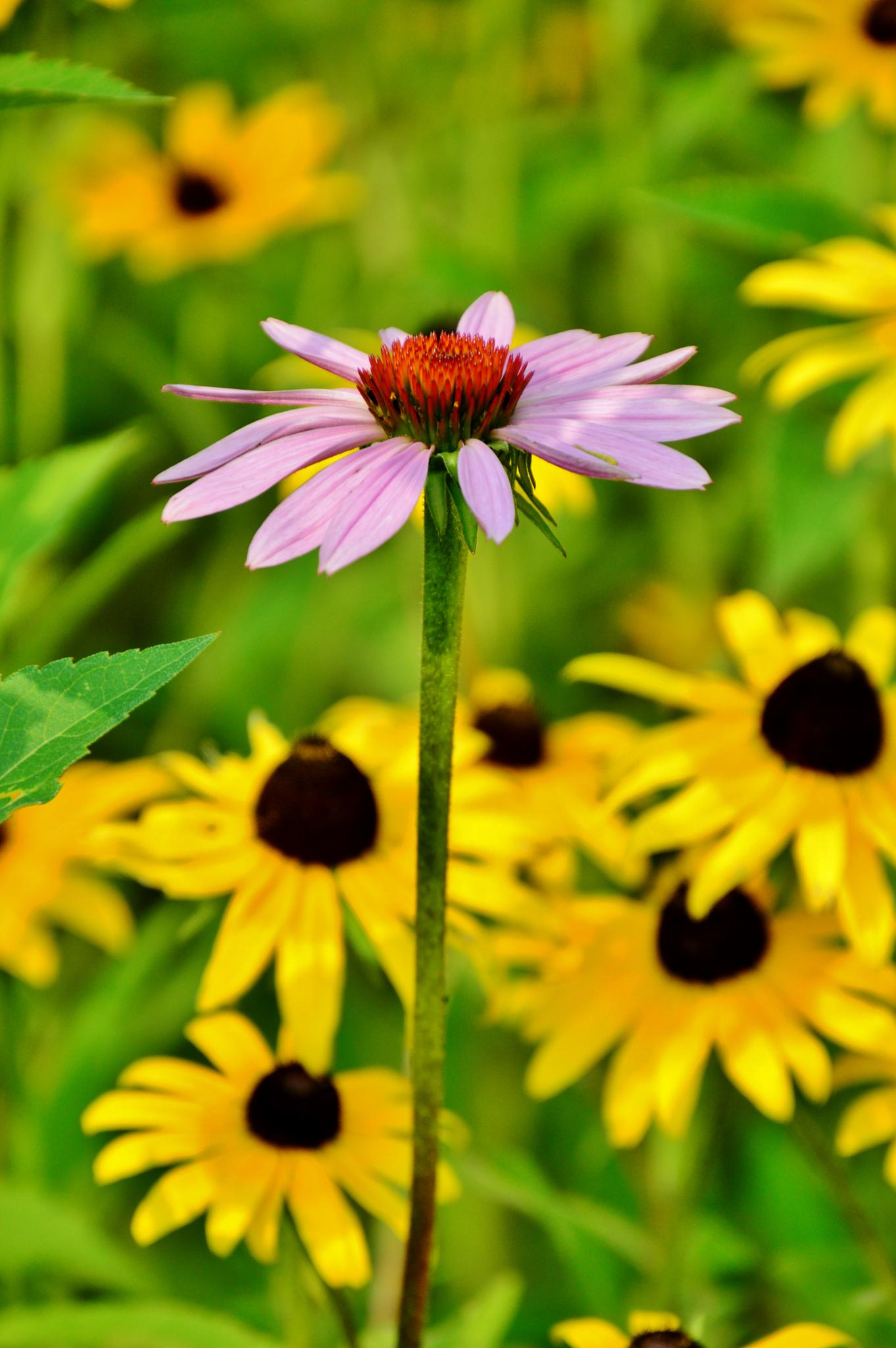 Flower by Doug Fosnight