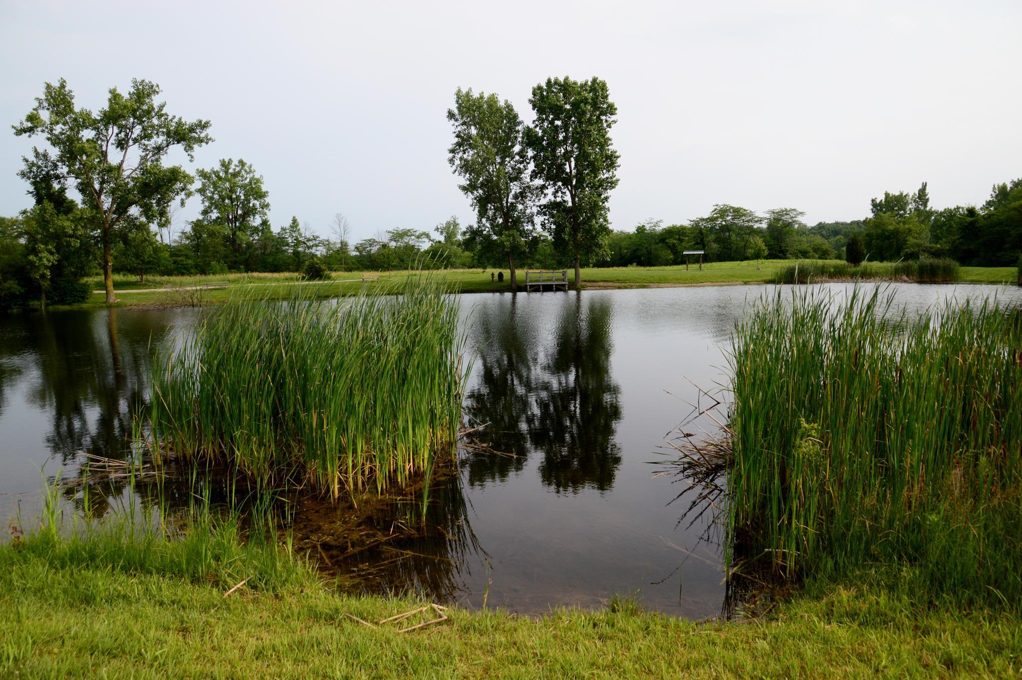 View Of Fishing Pond by Doug Fosnight