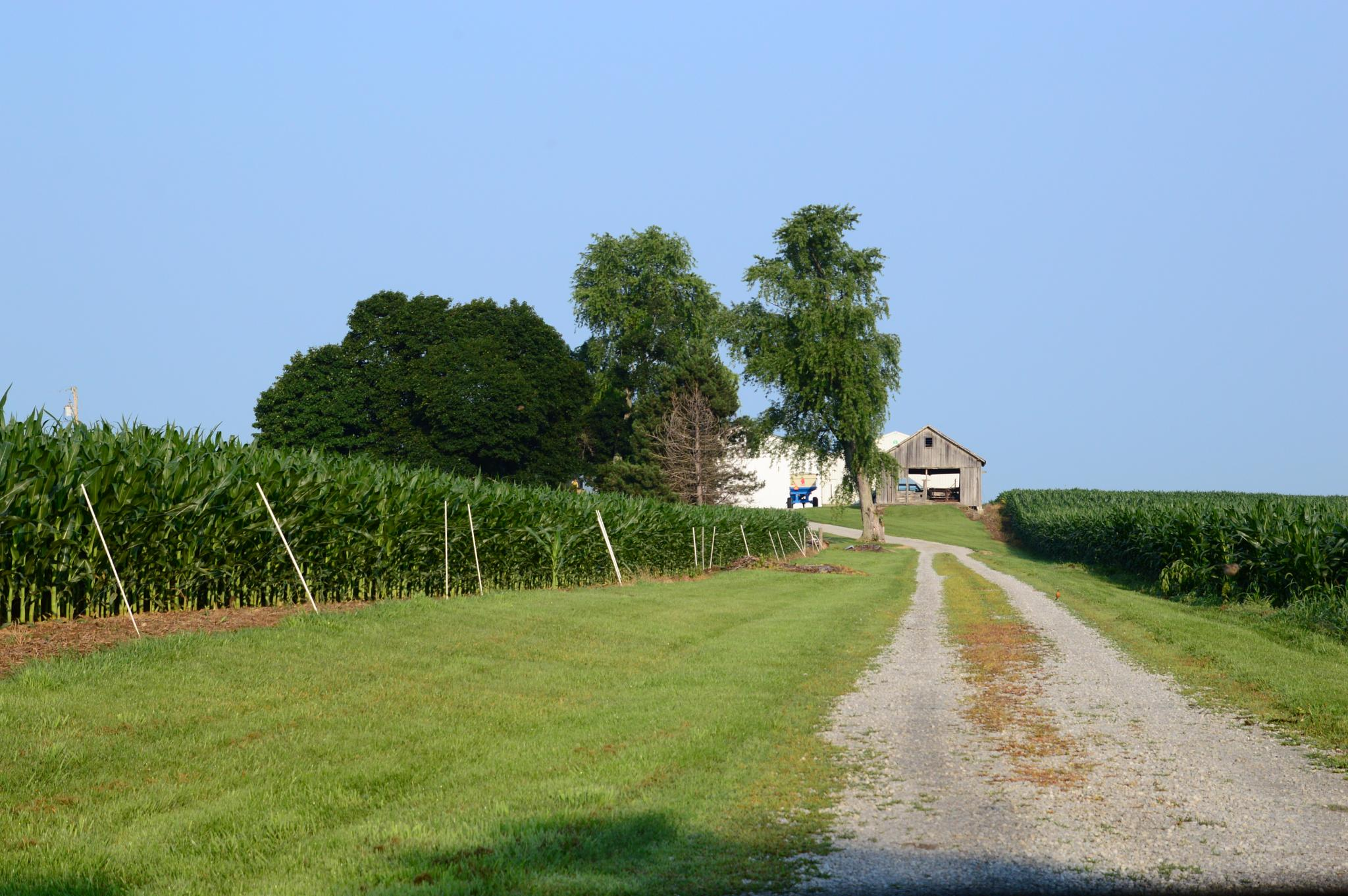 Ohio Farm by Doug Fosnight