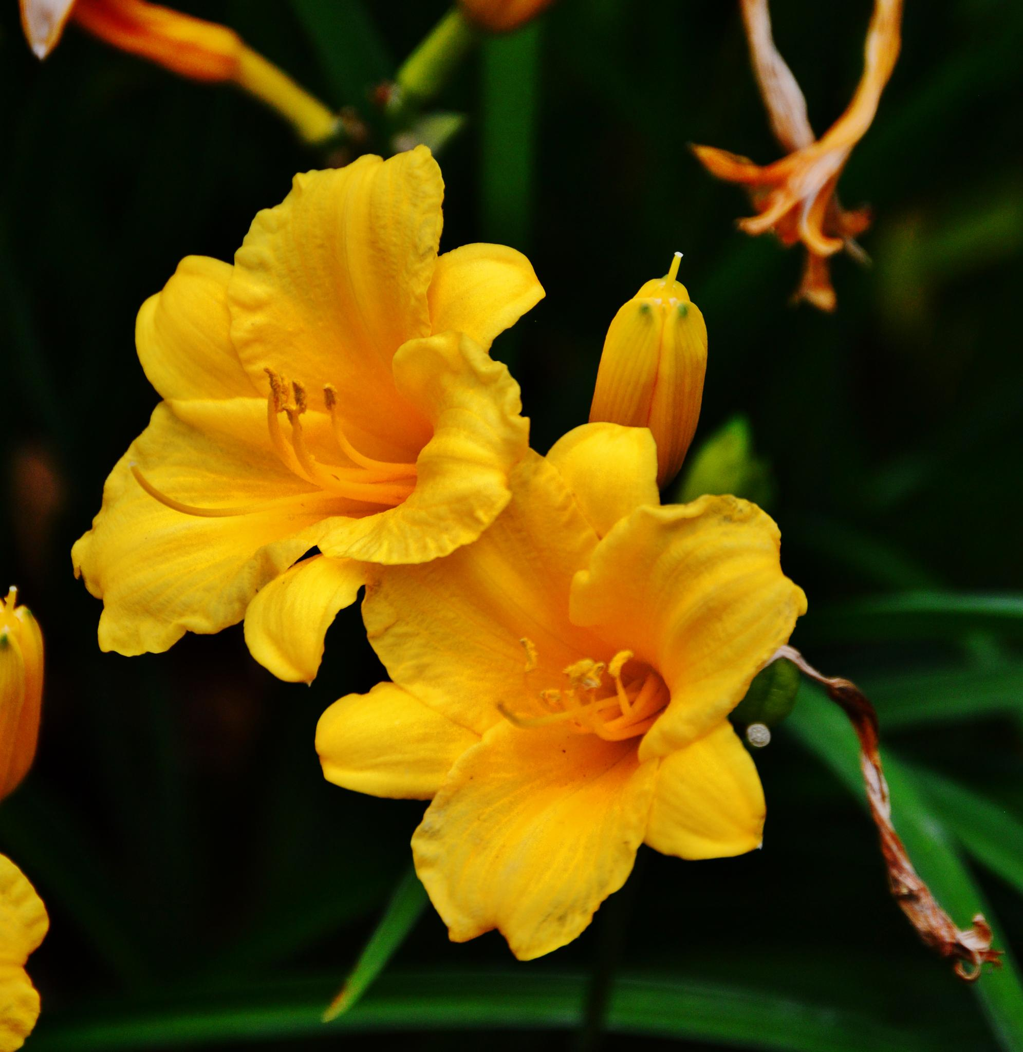 Flowers by Doug Fosnight