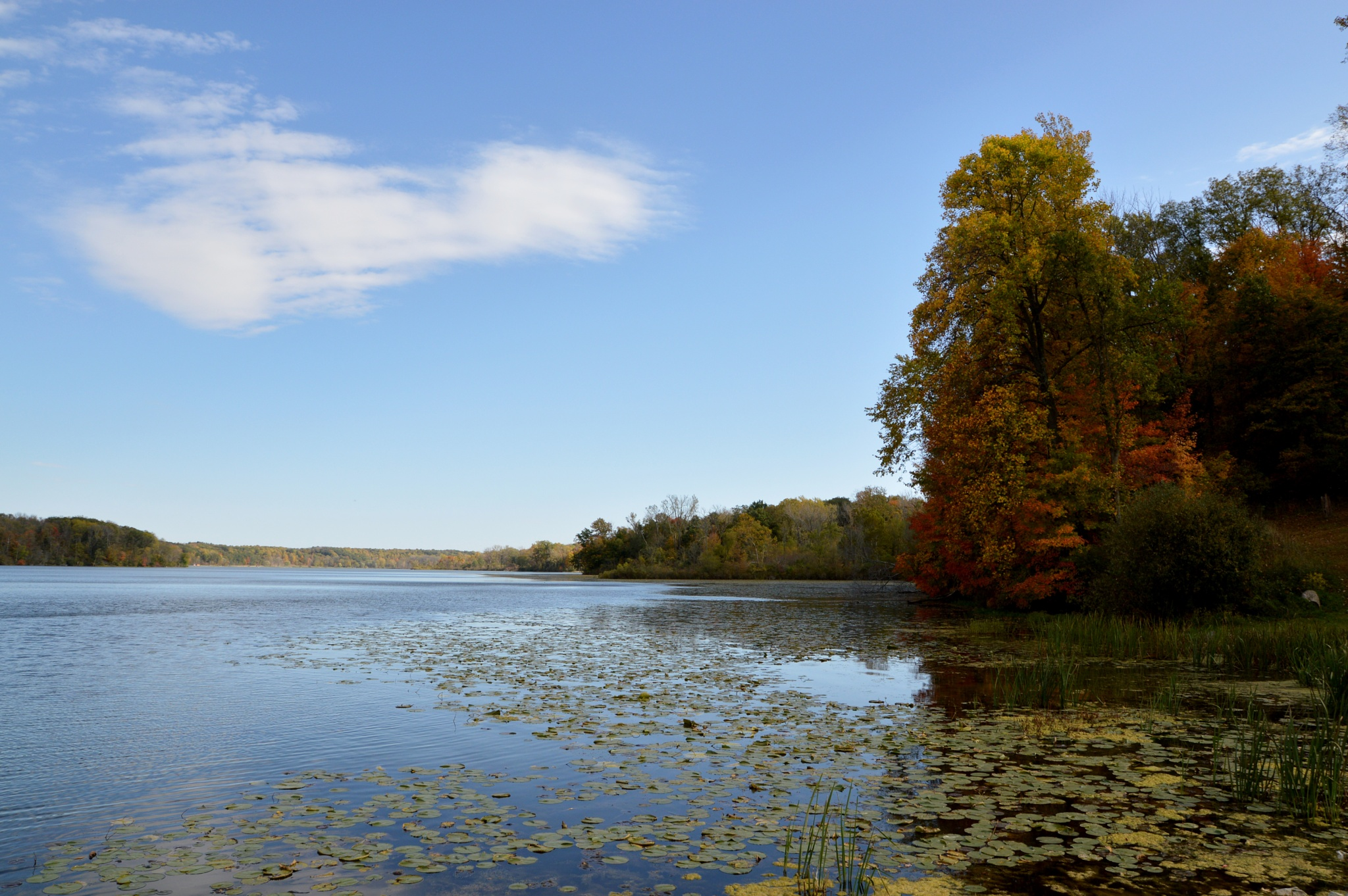 View of the lake by Doug Fosnight