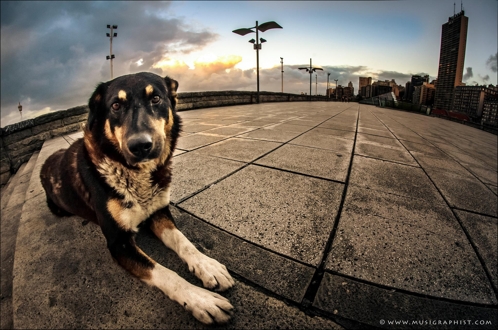 Dog by Sergio Moya Photography