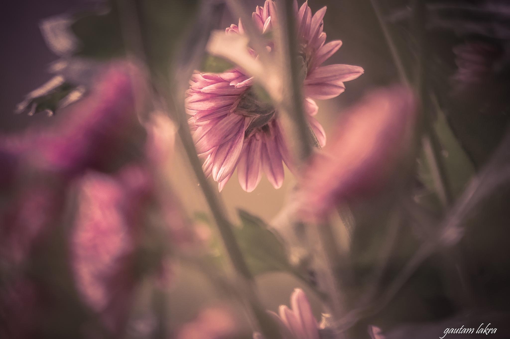 Flower season  by gautamlakra