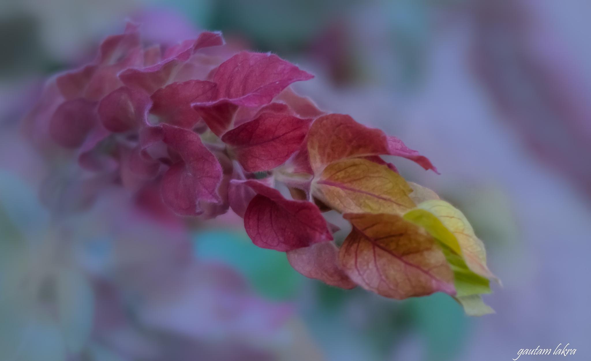 Creeping autumn ! by gautamlakra