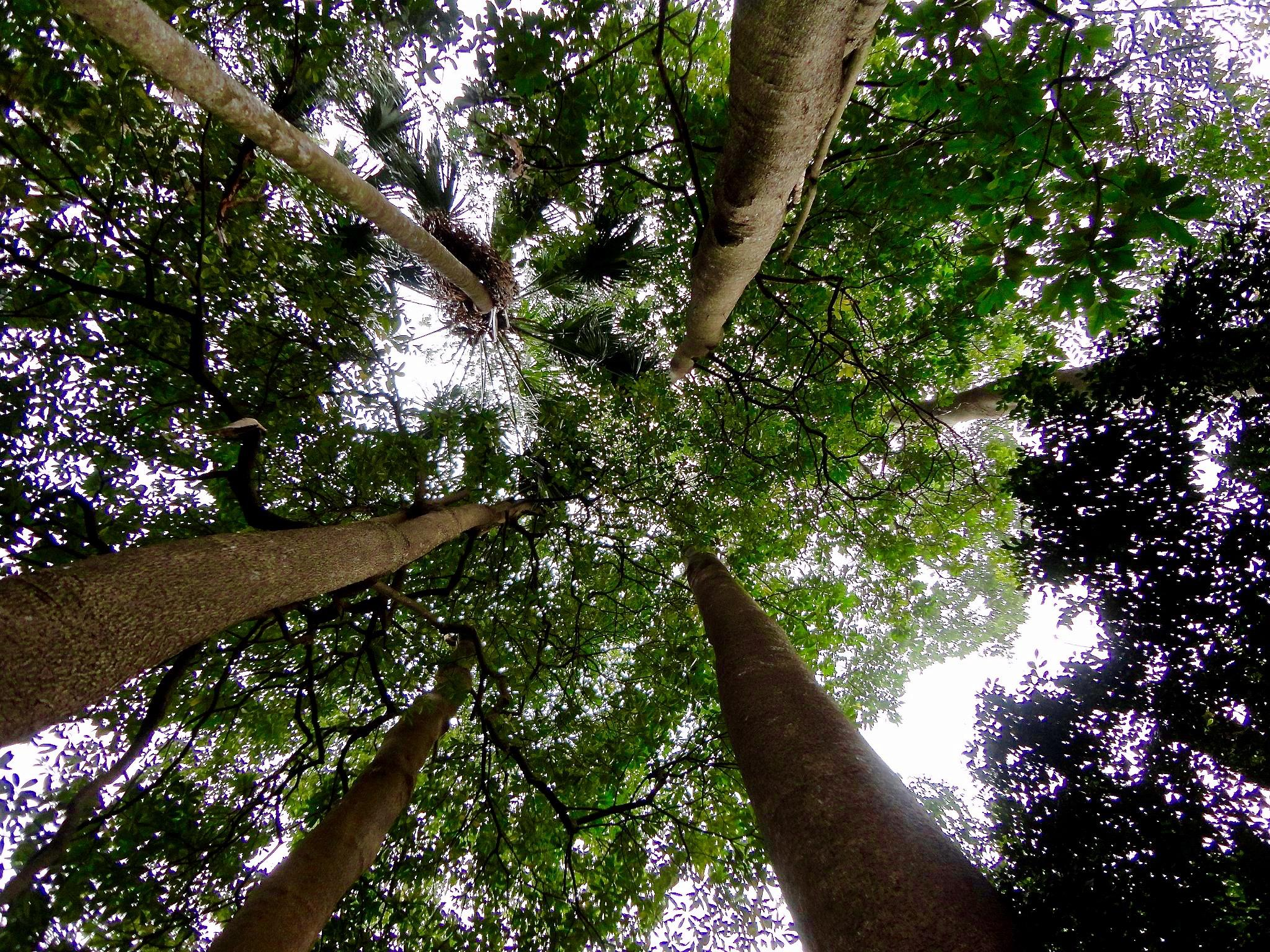 Tall Trees by Berlins Calix