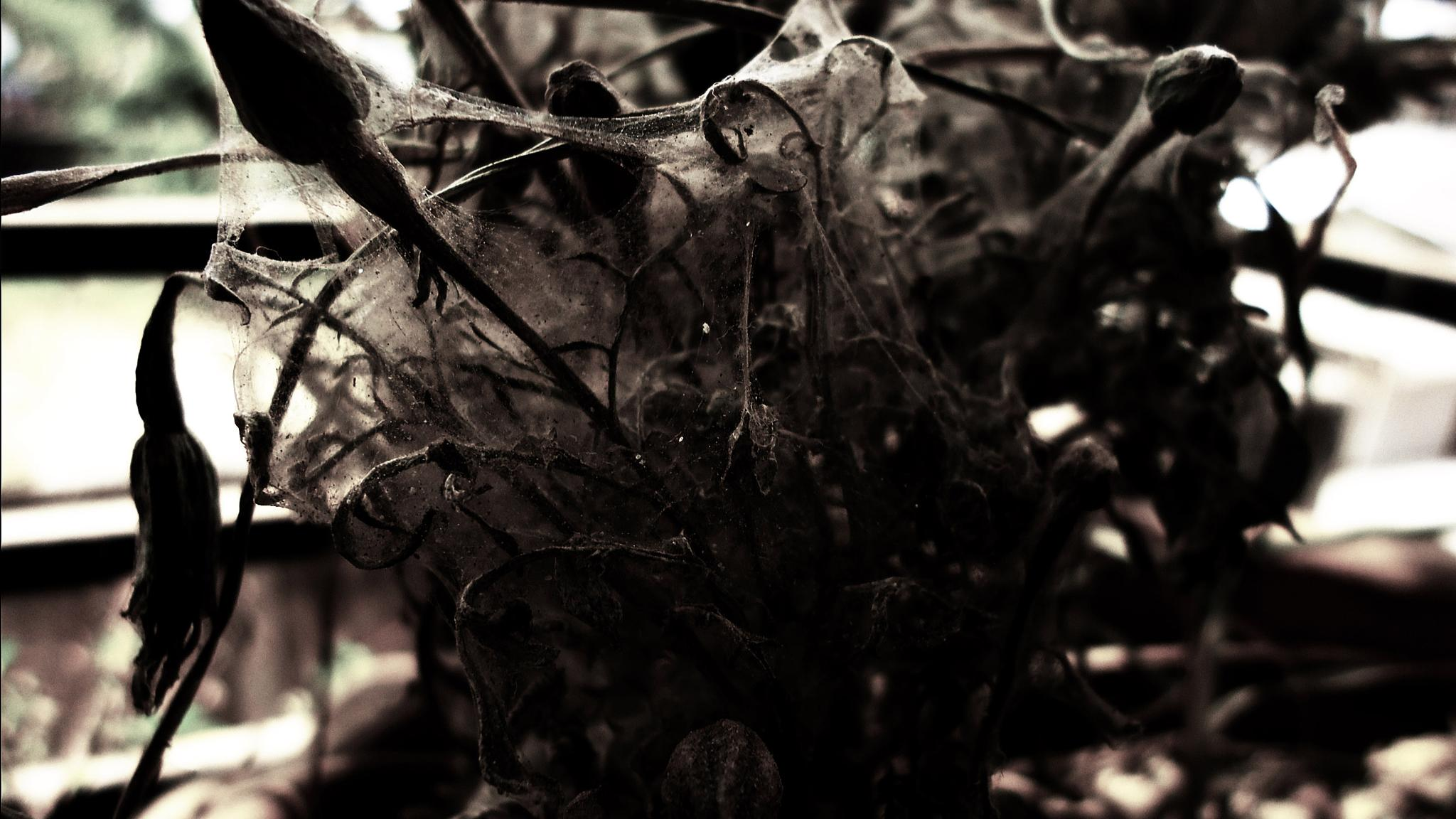 dark hollow  by reza67473