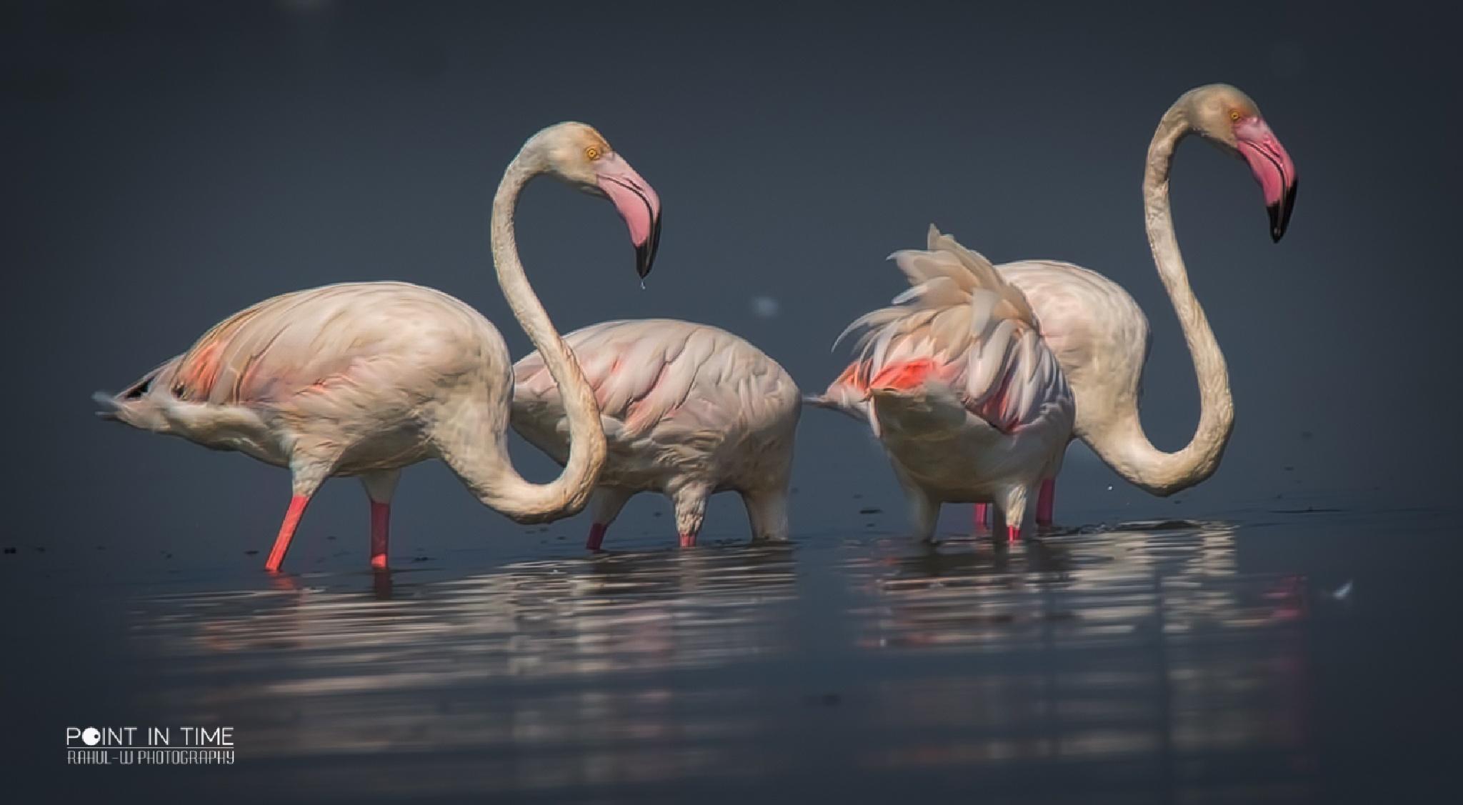 Flamingo...Art. by Rahul Wedpathak