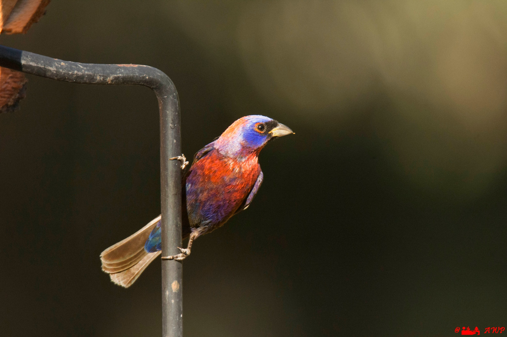 Feathers of many colors by artwildphotos