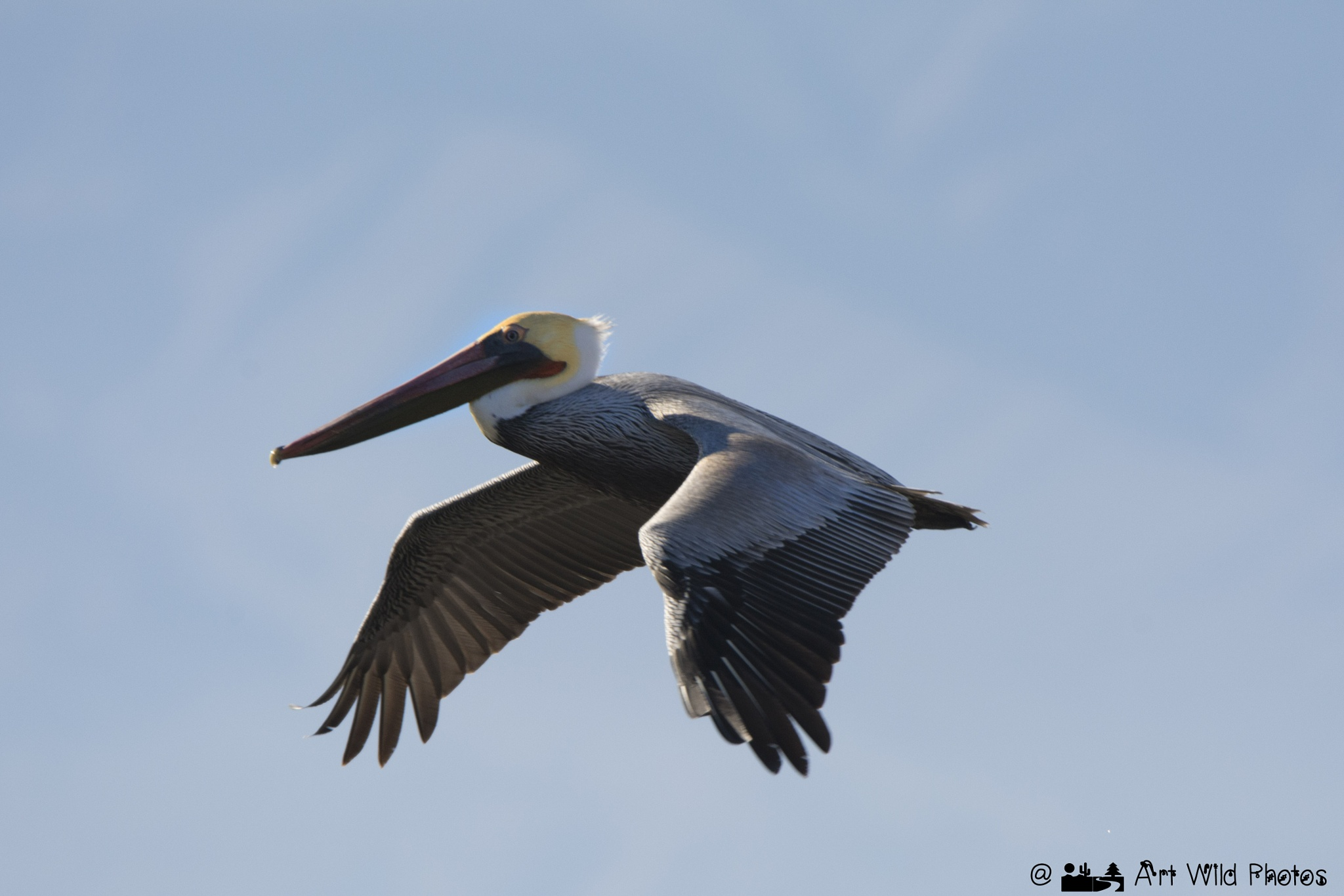 Beauty and grace in flight by artwildphotos