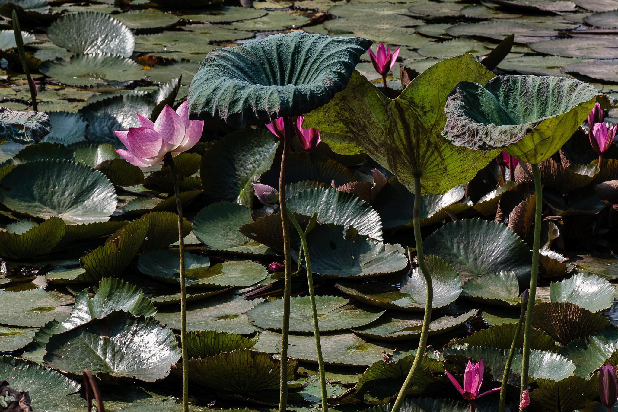 Untitled by Tai Bao