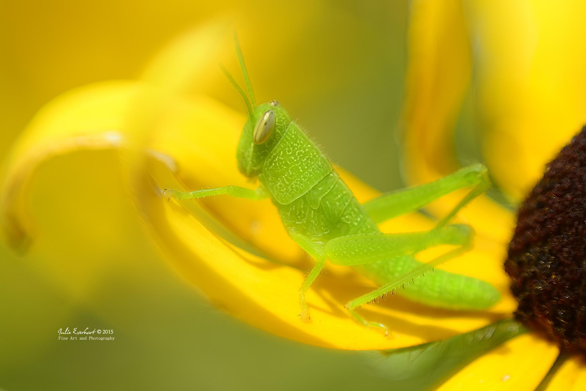 Green is Beautiful by julev69
