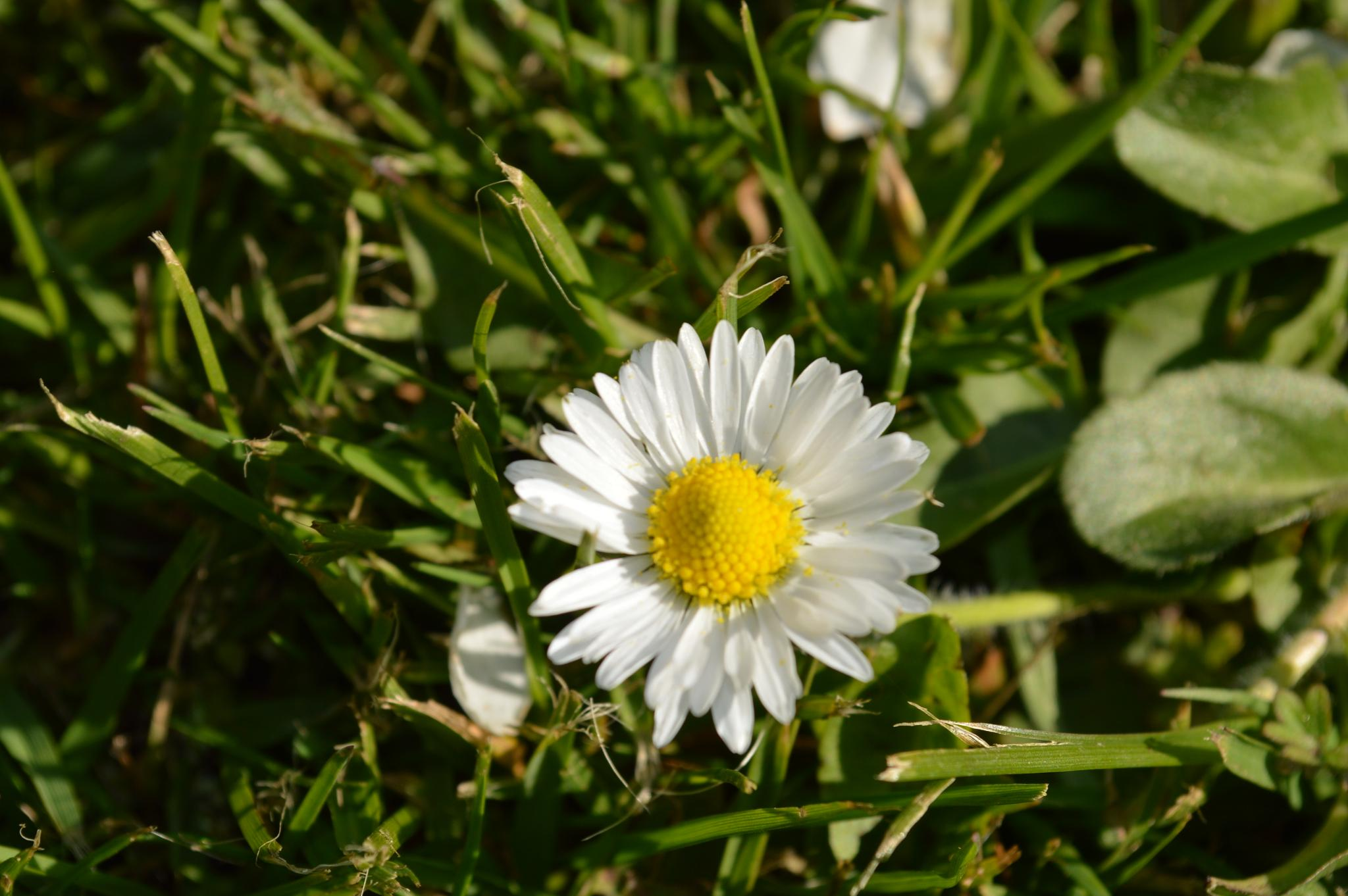 spring by Mariola mularczyk