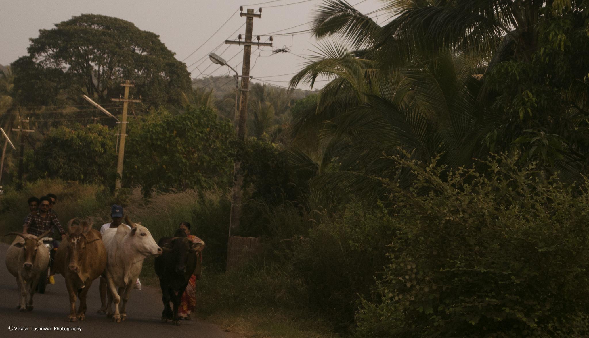 Goa Village by Vikash Toshniwal
